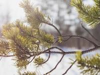 close-up photo of green tree