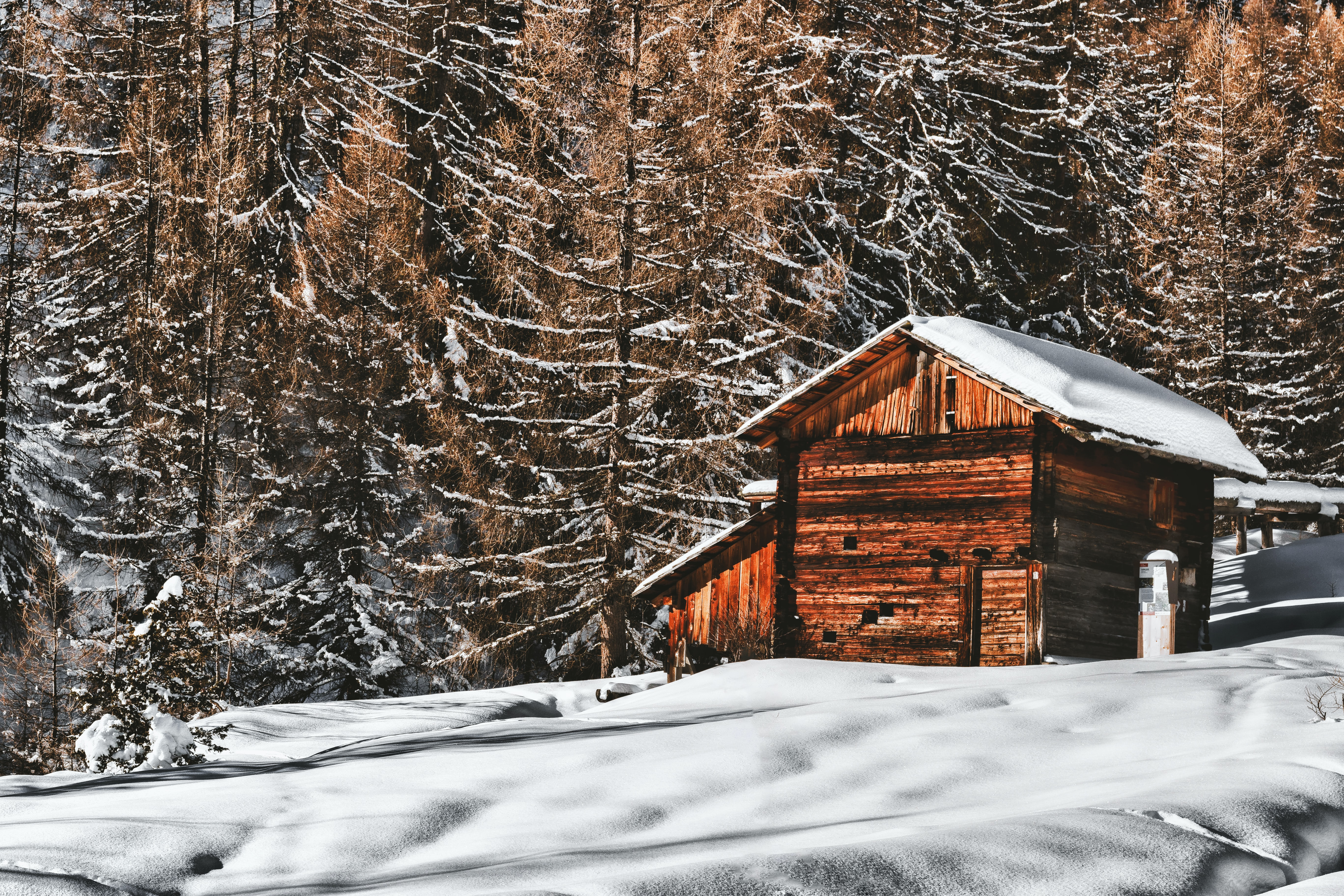 photography of brown wooden cabin near trees