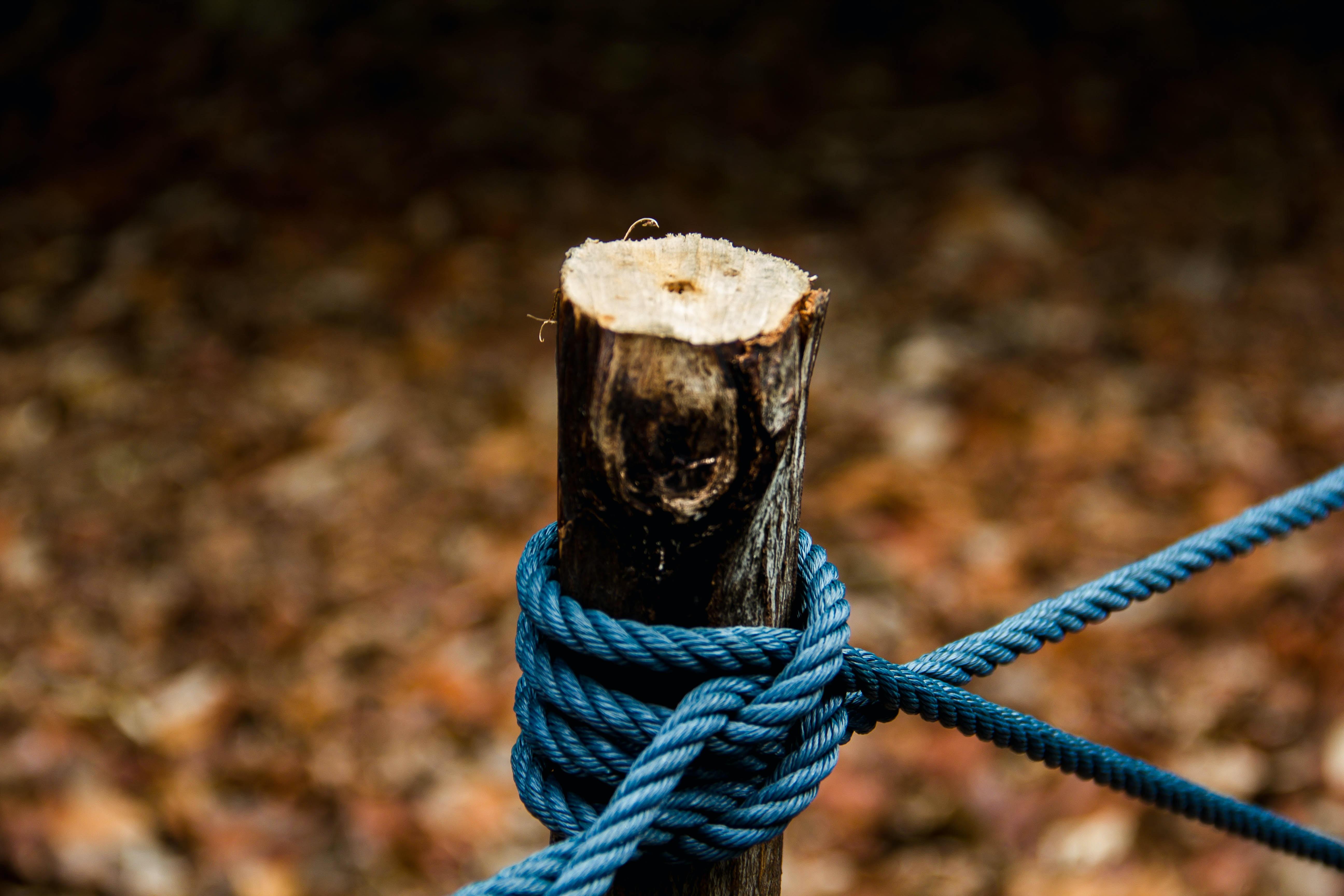brown rope tie on wood log