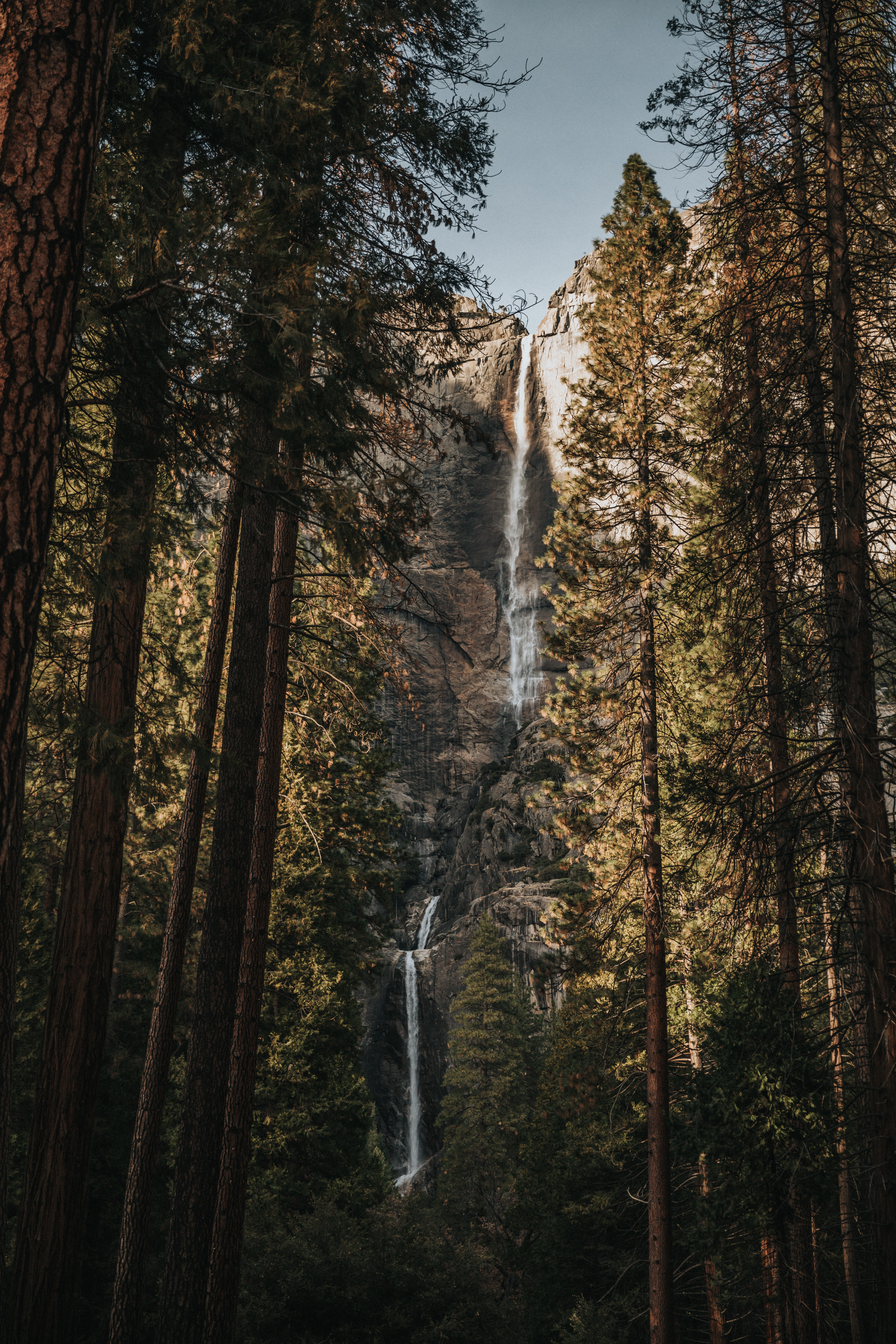 low-angle photography of trees near waterfall at daytime