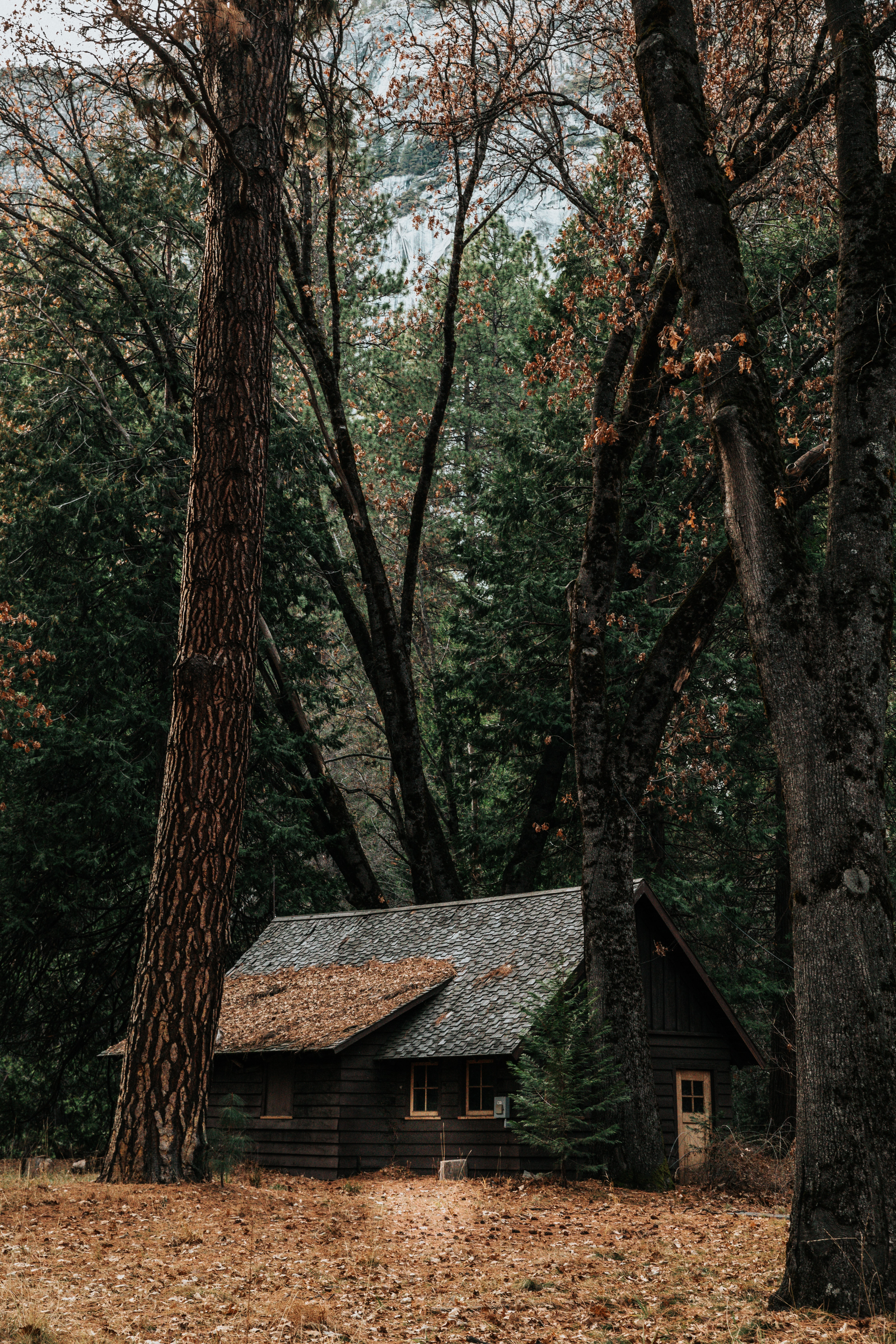 gray wooden house surrounded by trees
