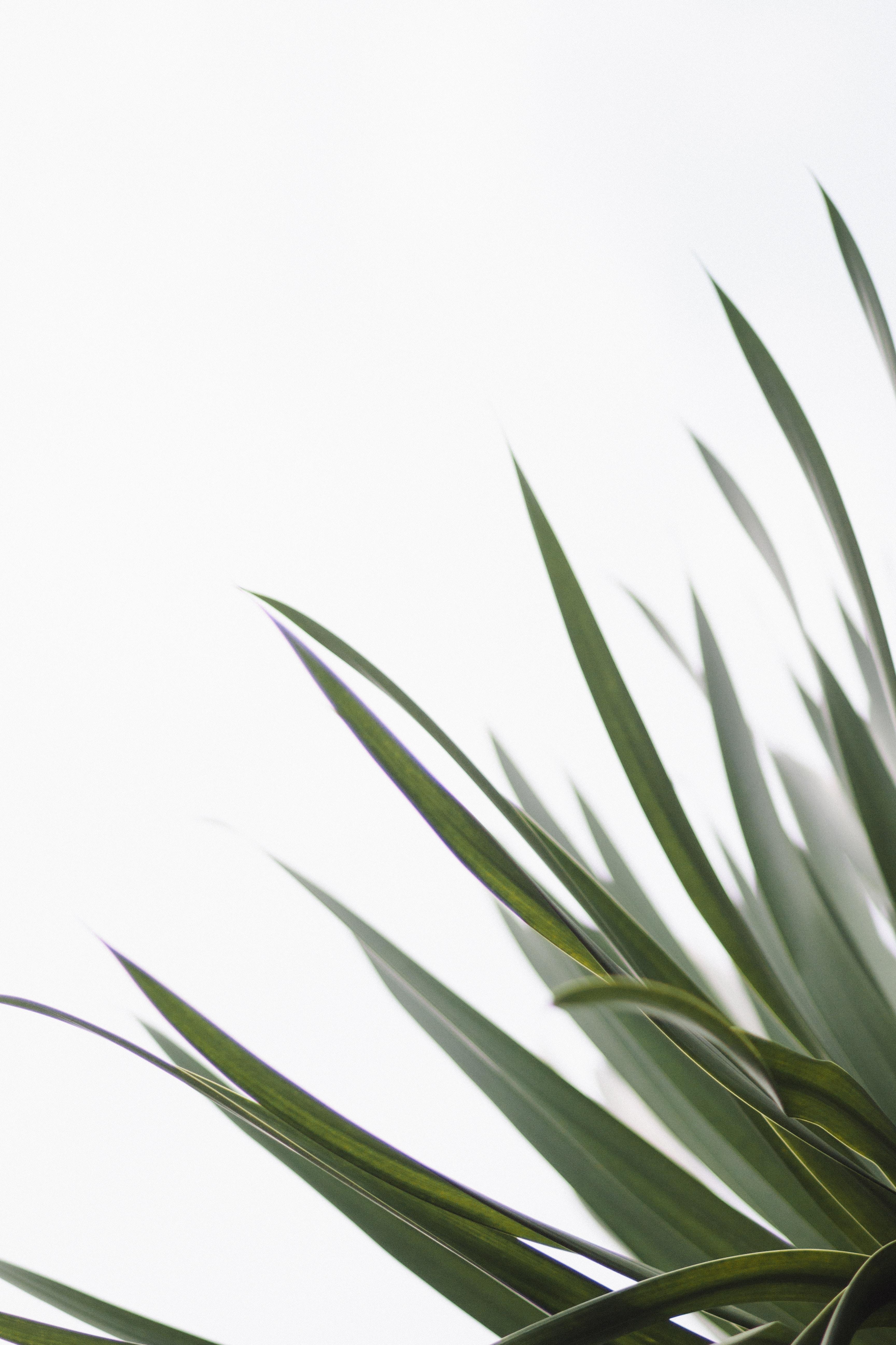 close-up photo of green leaf