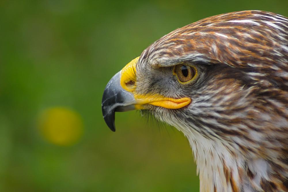 selective macro photography of brown bird of prey