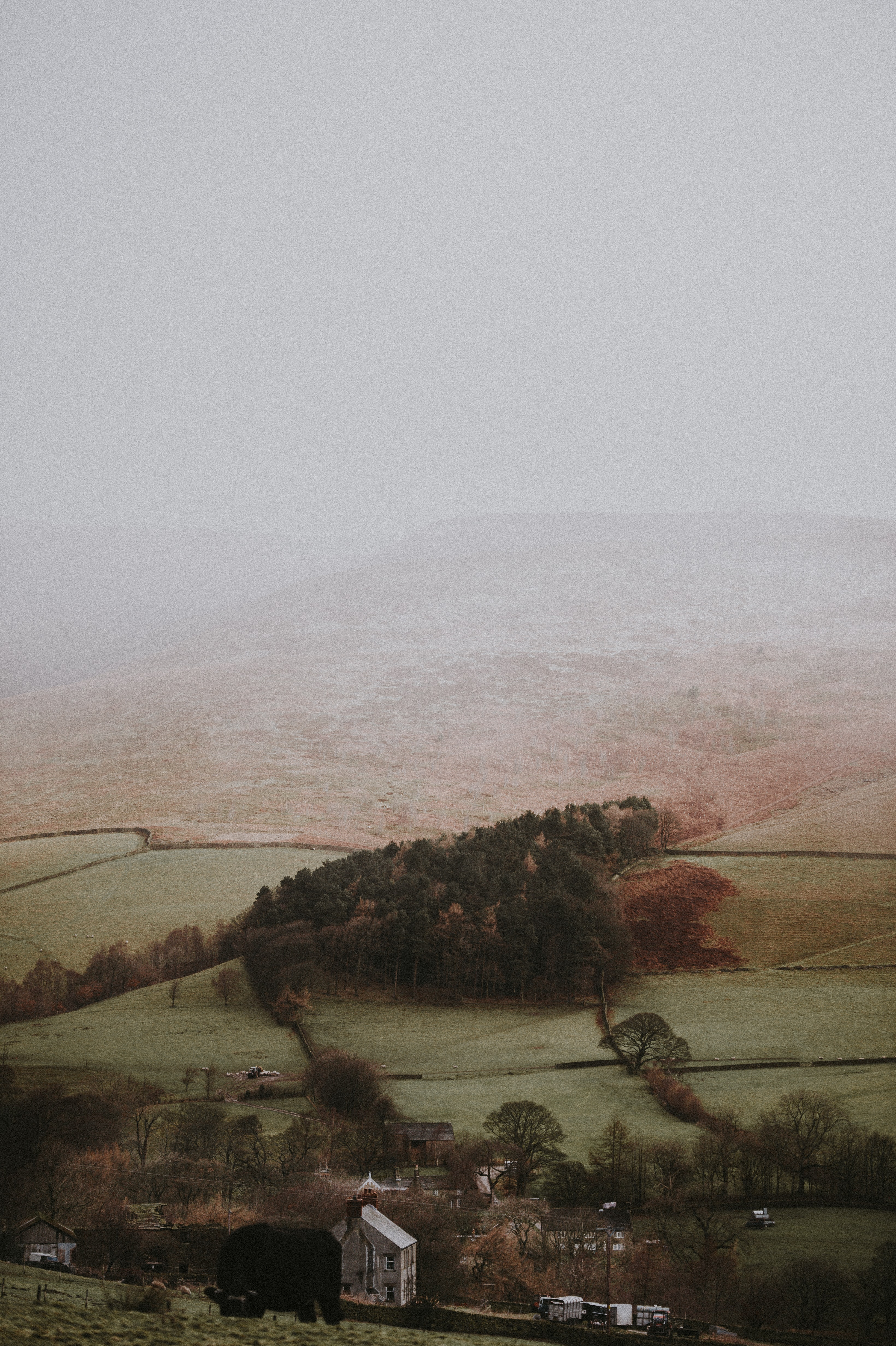 aerial photography of green trees and mountain under foggy sky