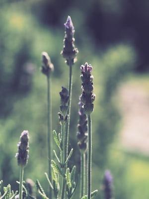 1596. Növények világa