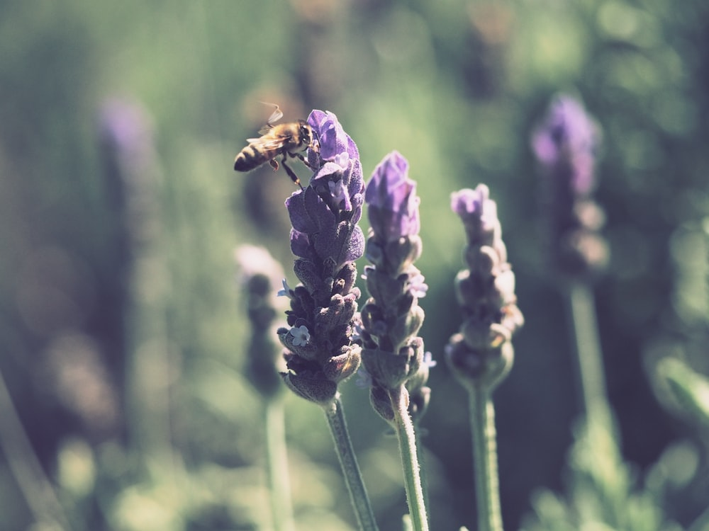 yellow bee beside purple petaled flower during daytime