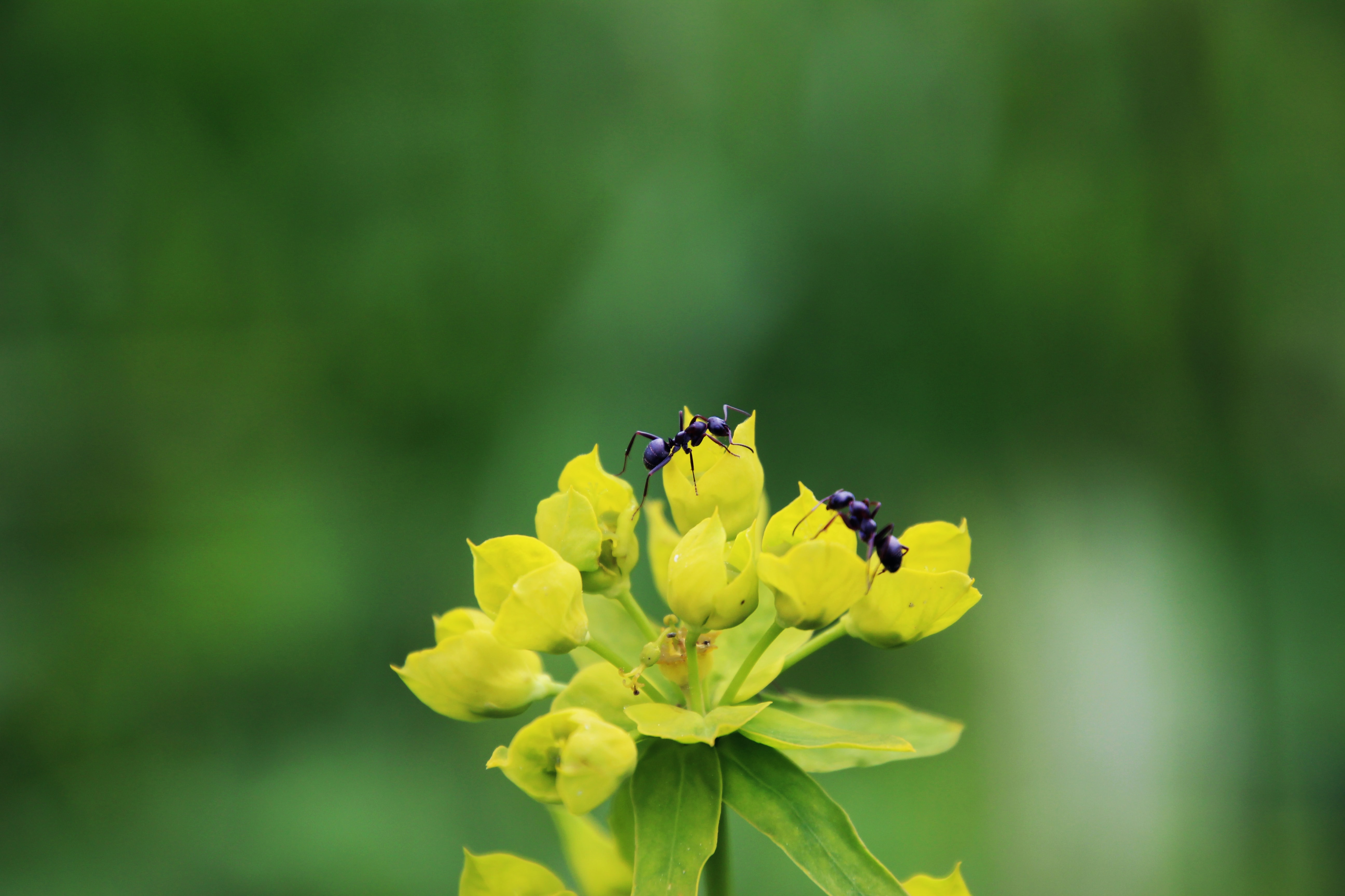 shallow focus of ants on yellow flower