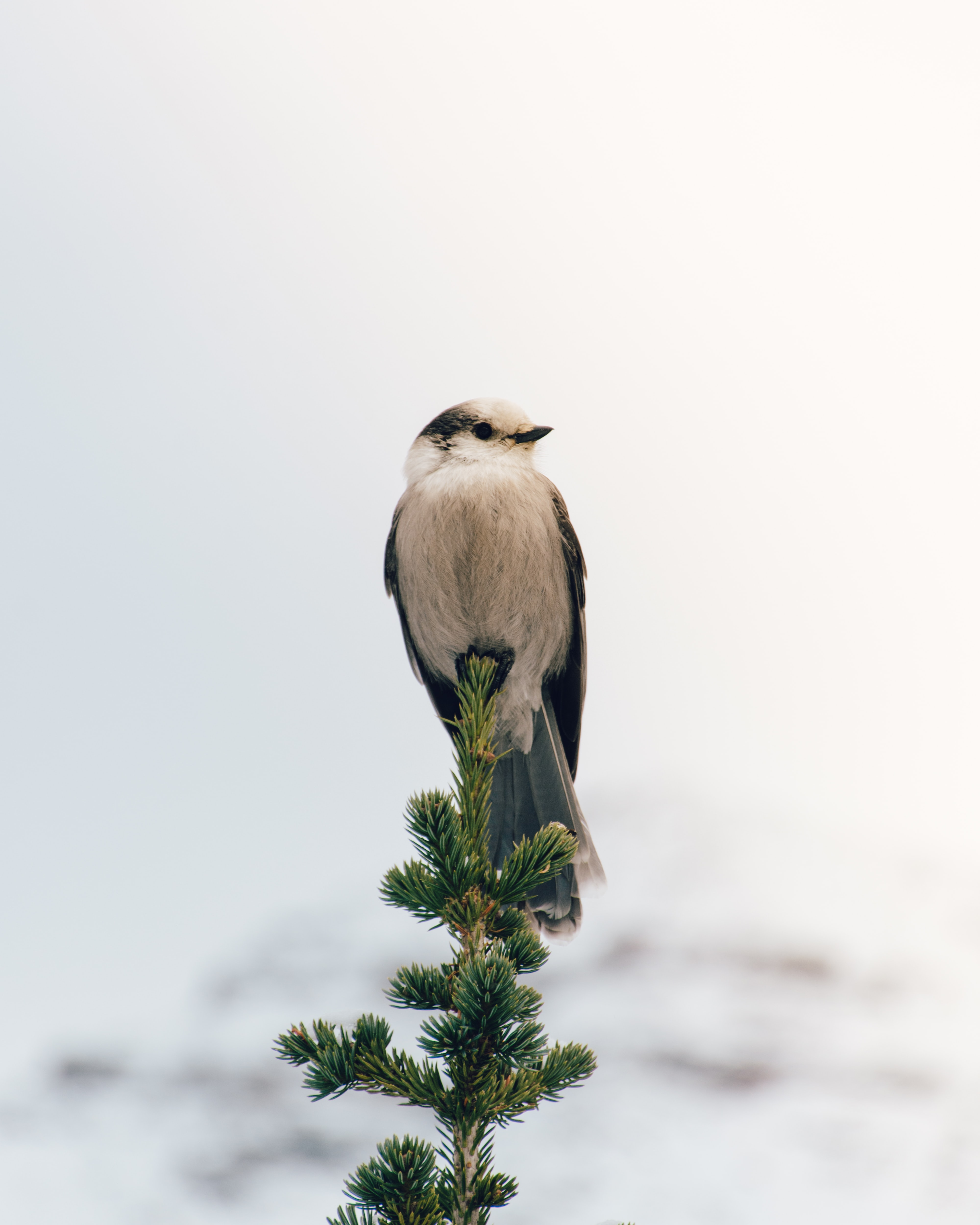 white and black bird perched on green twig during daytime