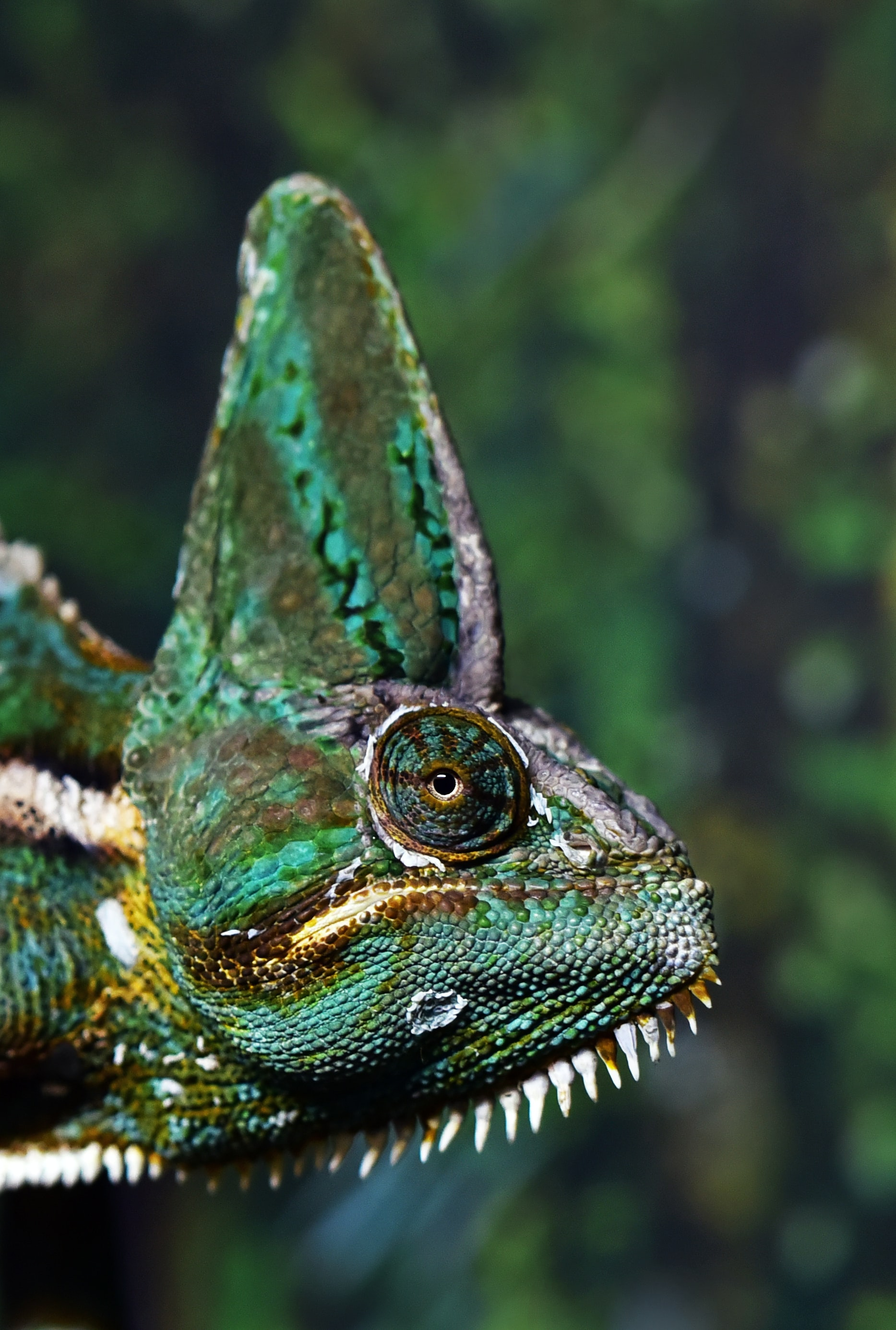 closeup photo of green and white chameleon