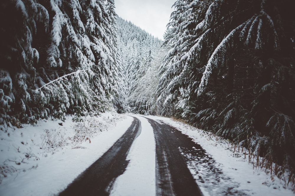road in the middle of trees with snow grayscale photo