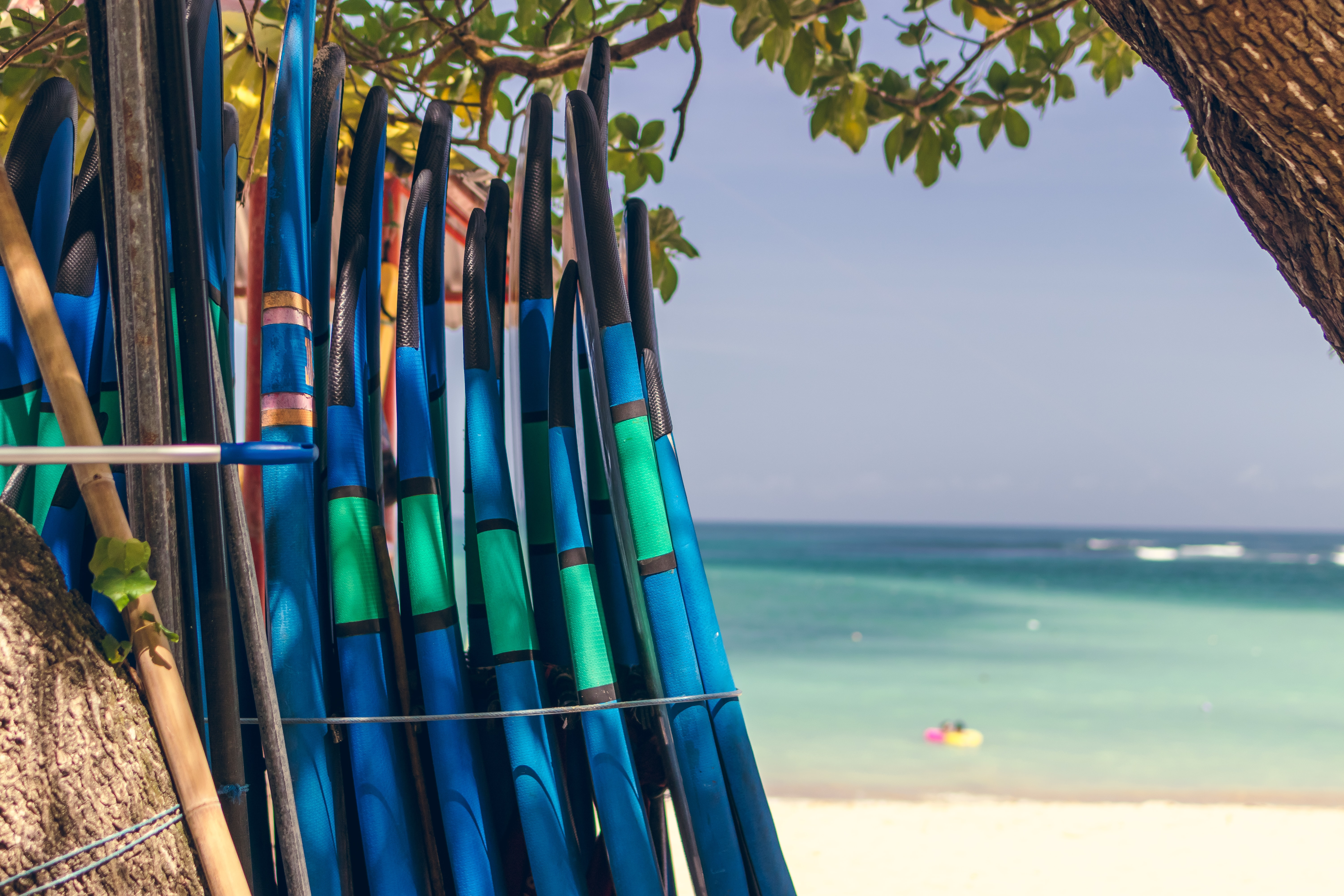 assorted-color surfboards beside the tree
