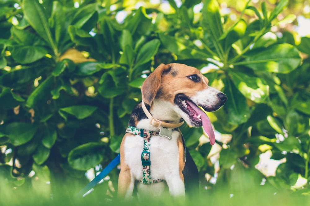shallow focus photography of tricolor dog