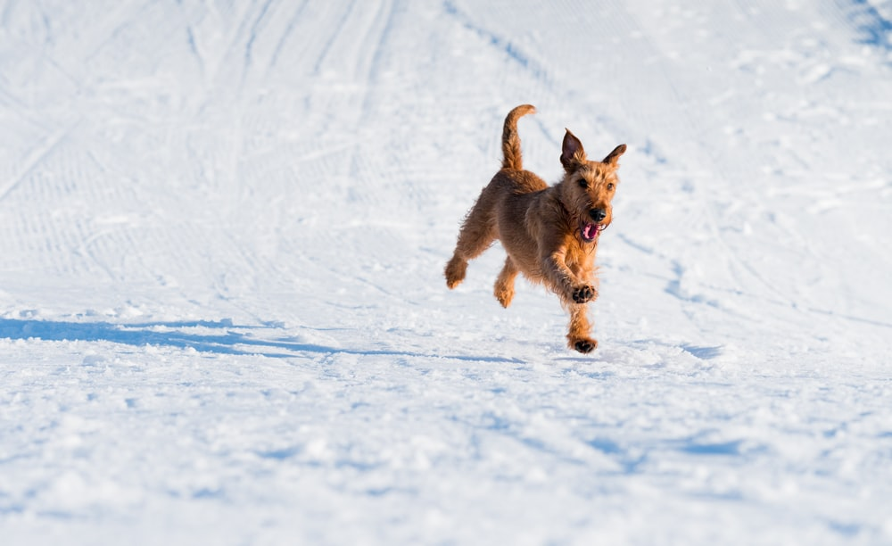 brown dog running on snowfield