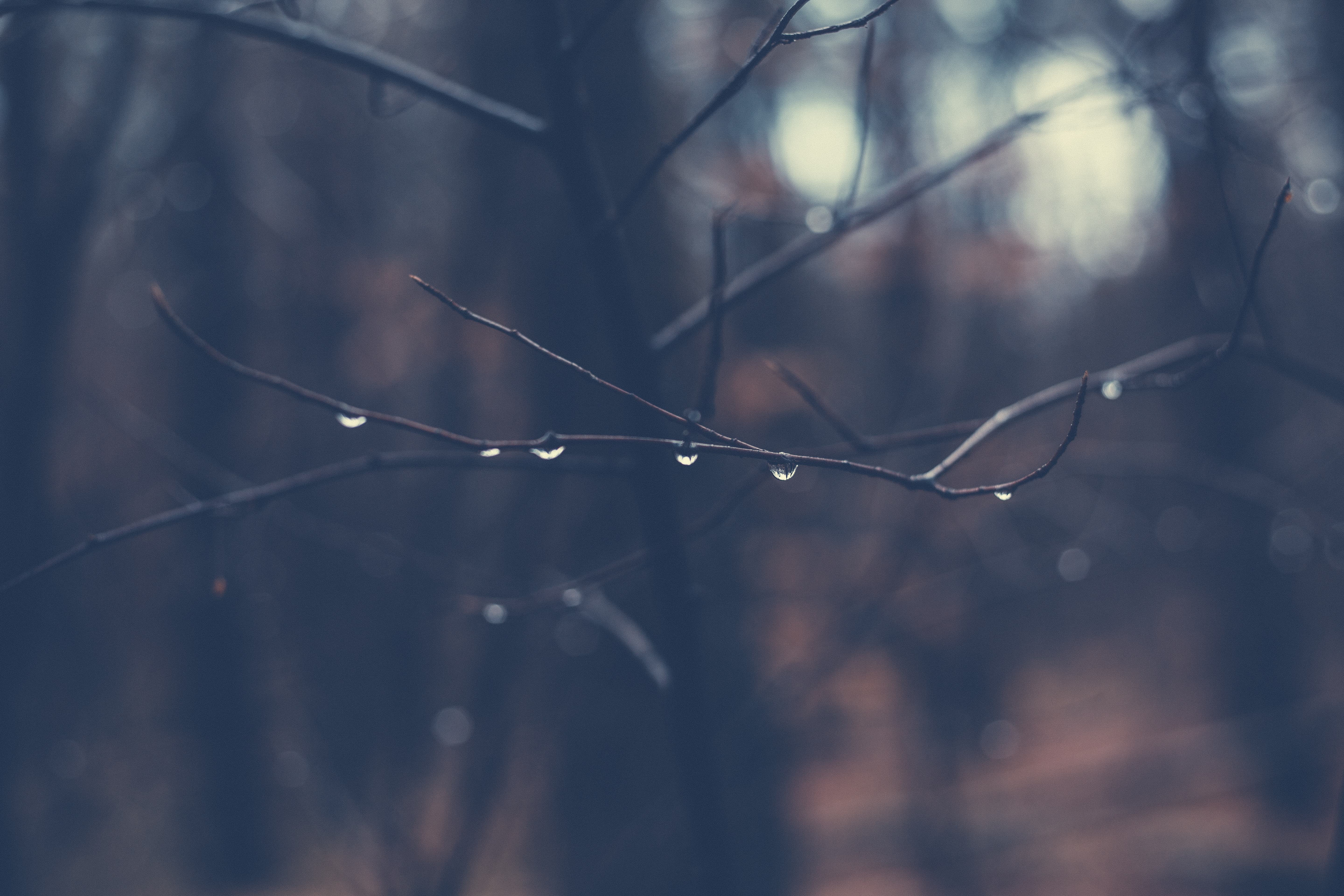 shallow focus photography of tree branch with morning dew
