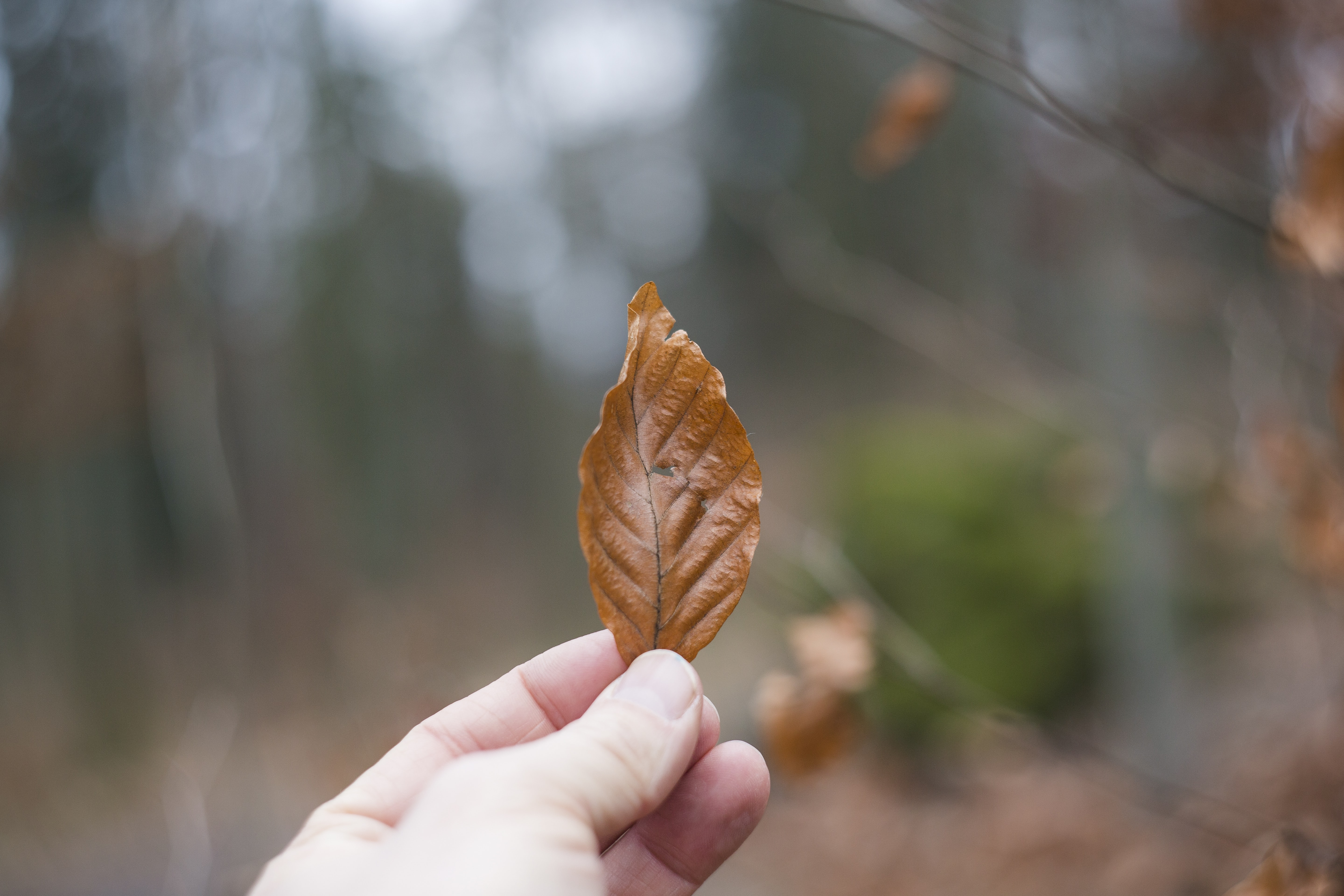 selective focus photography of person holding brown leaf