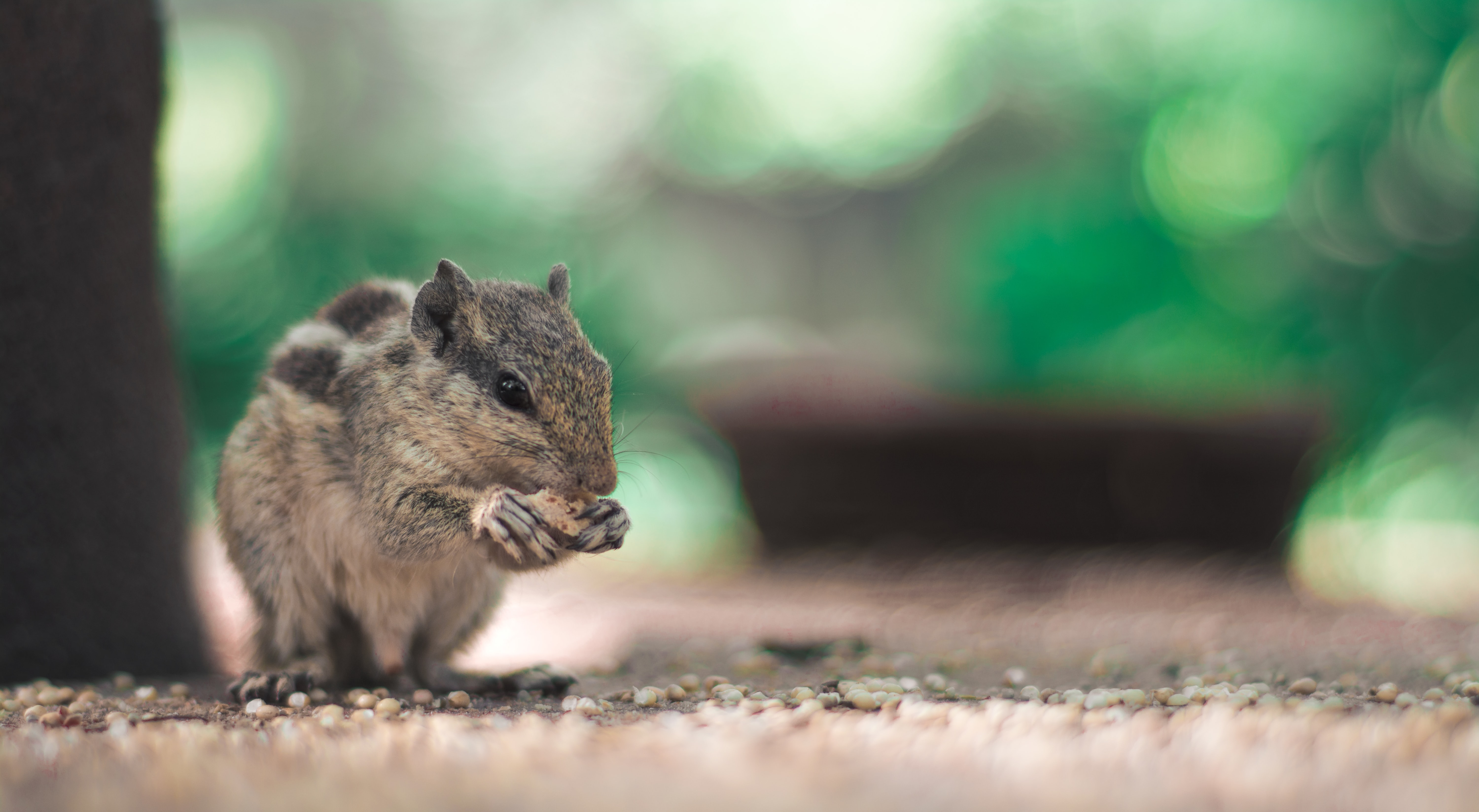 shallow focus photography of eating squirrel