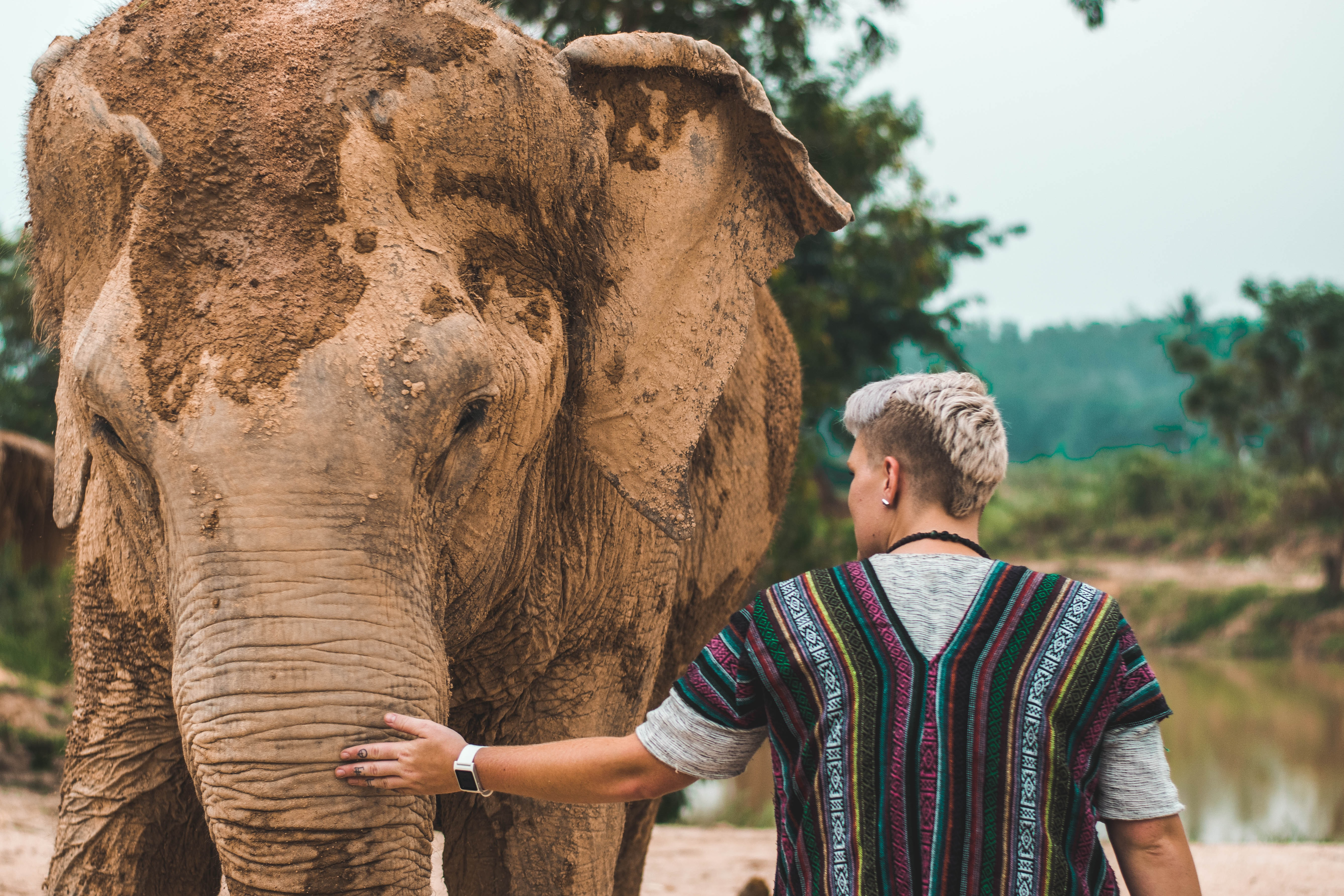 man wearing baja jacket touching brown elephant covered with mud