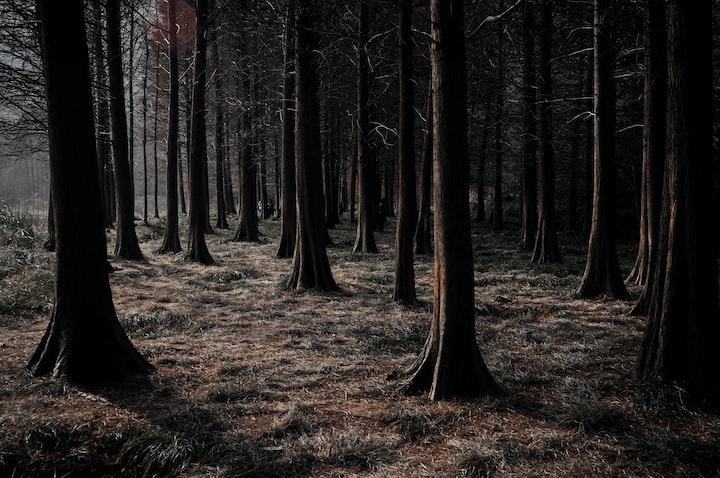 Woodland Rituals