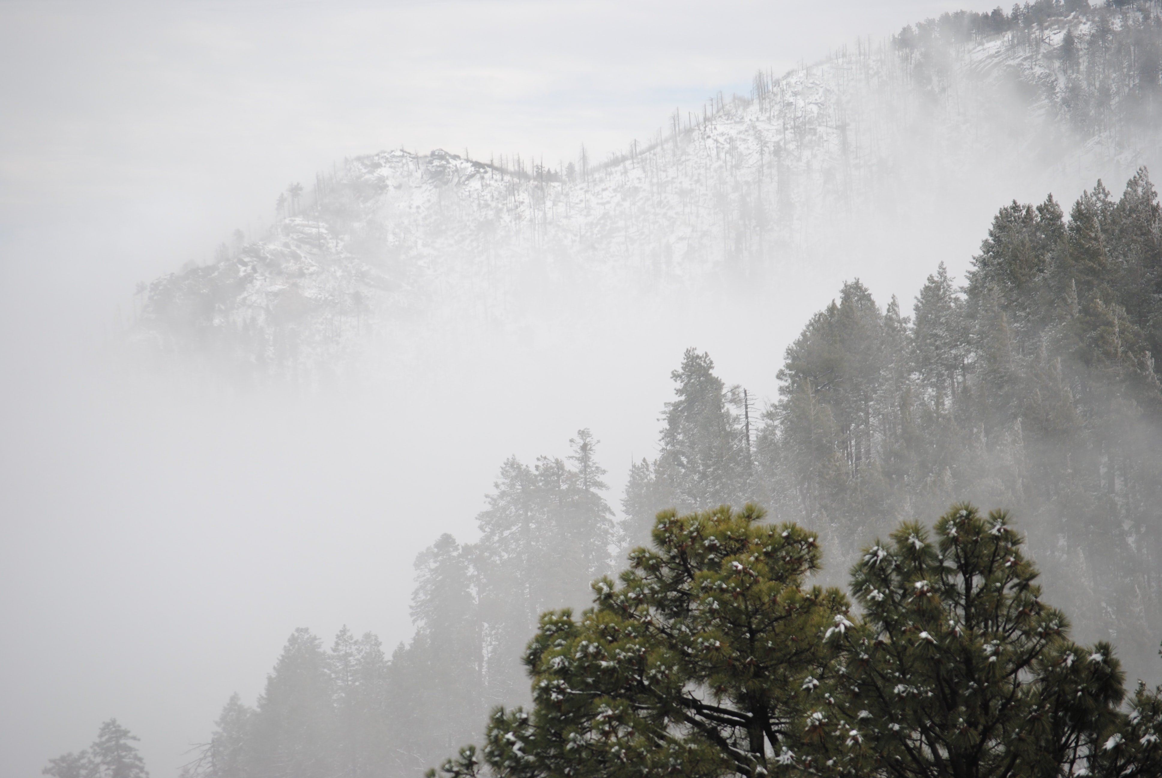 trees sitting on mountain covered in fog
