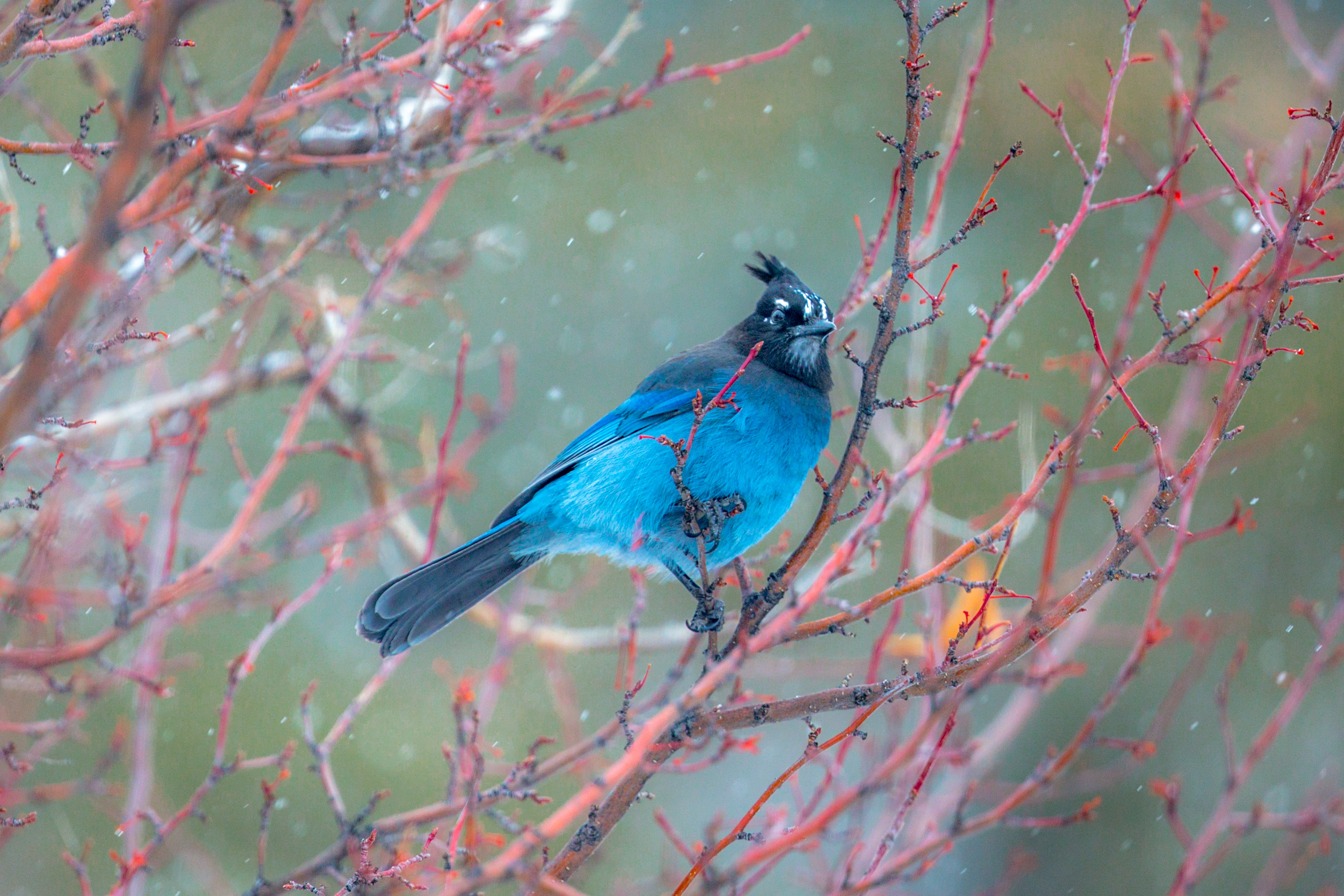 blue bird on tree branch