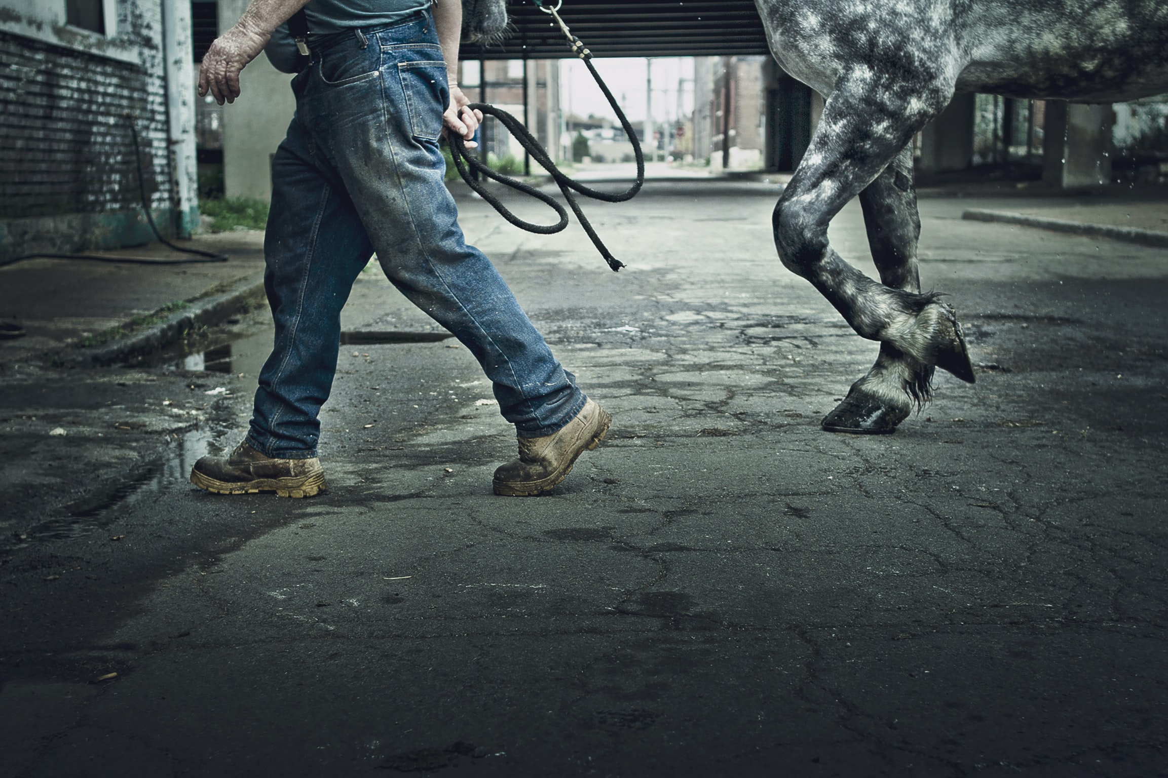 man wearing blue denim jeans waling with grey horse on grey concrete road