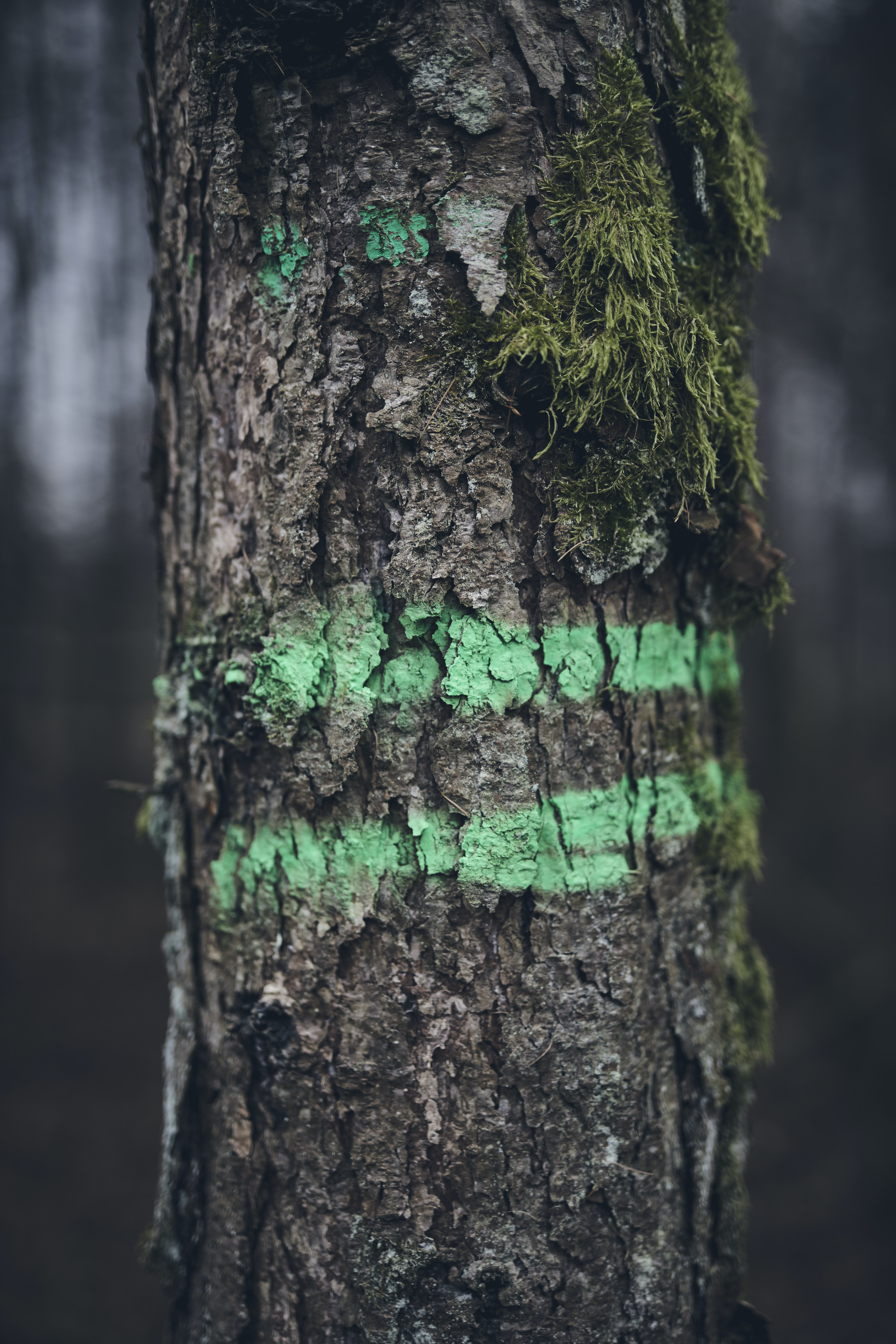 brown tree trunk with green striped paint and moss