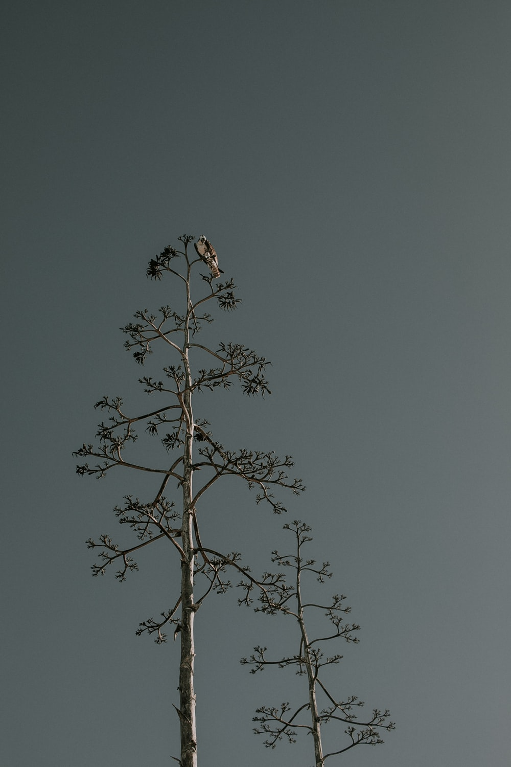 bird perched on top of tree during daytime