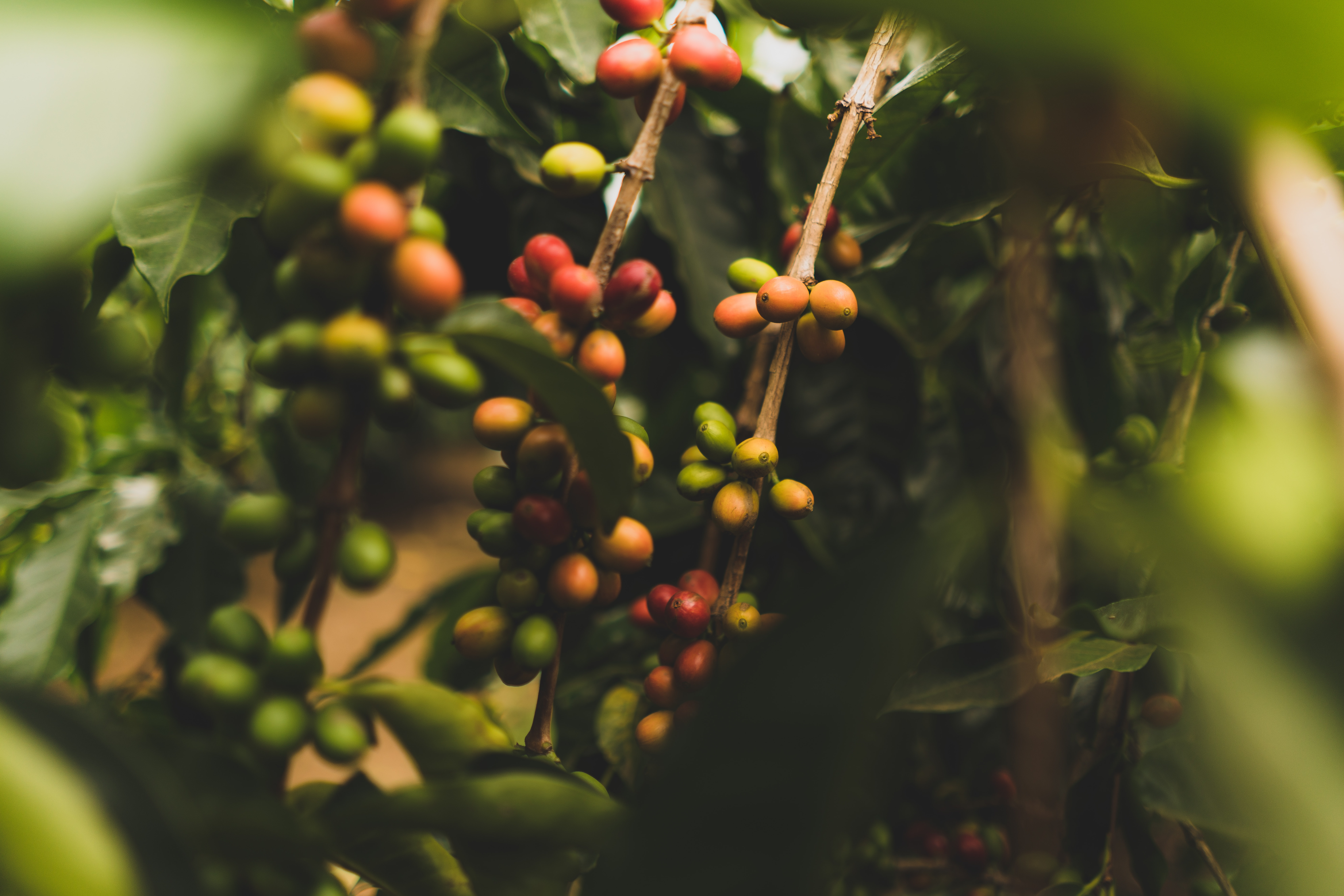round green and red berries