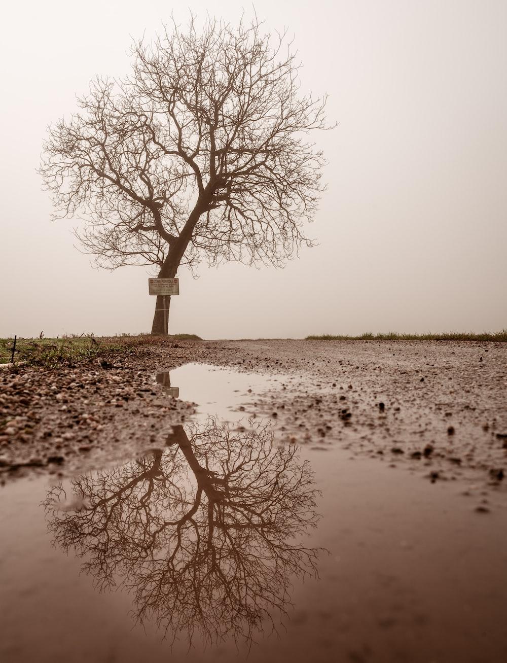 leafless tree beside pathway under gray sky