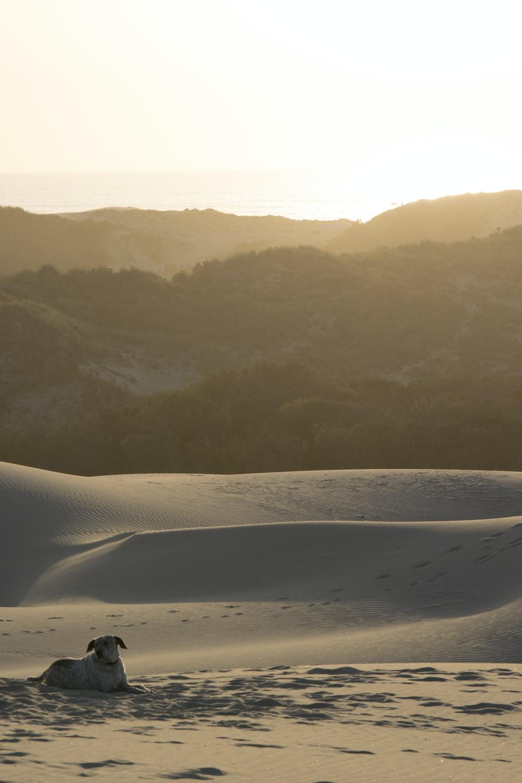 short-coated tan dog lying on sand near mountain at daytime
