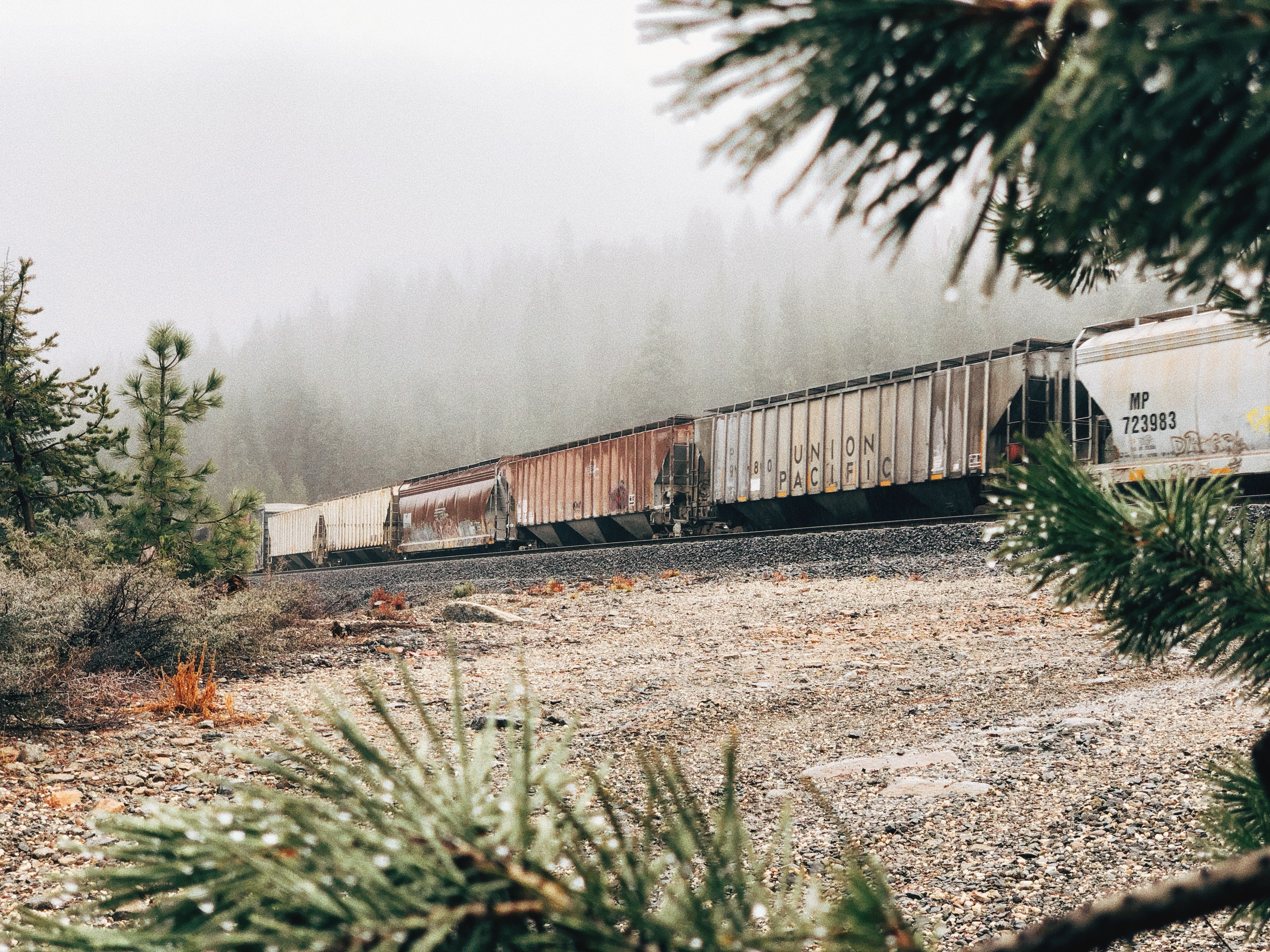 white and brown train in railroad in forest