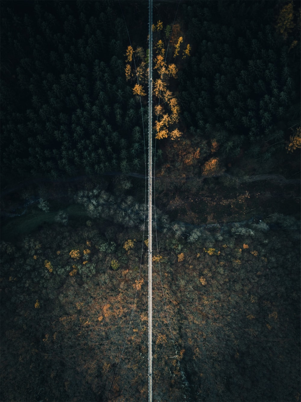 aerial photography of bridge between trees