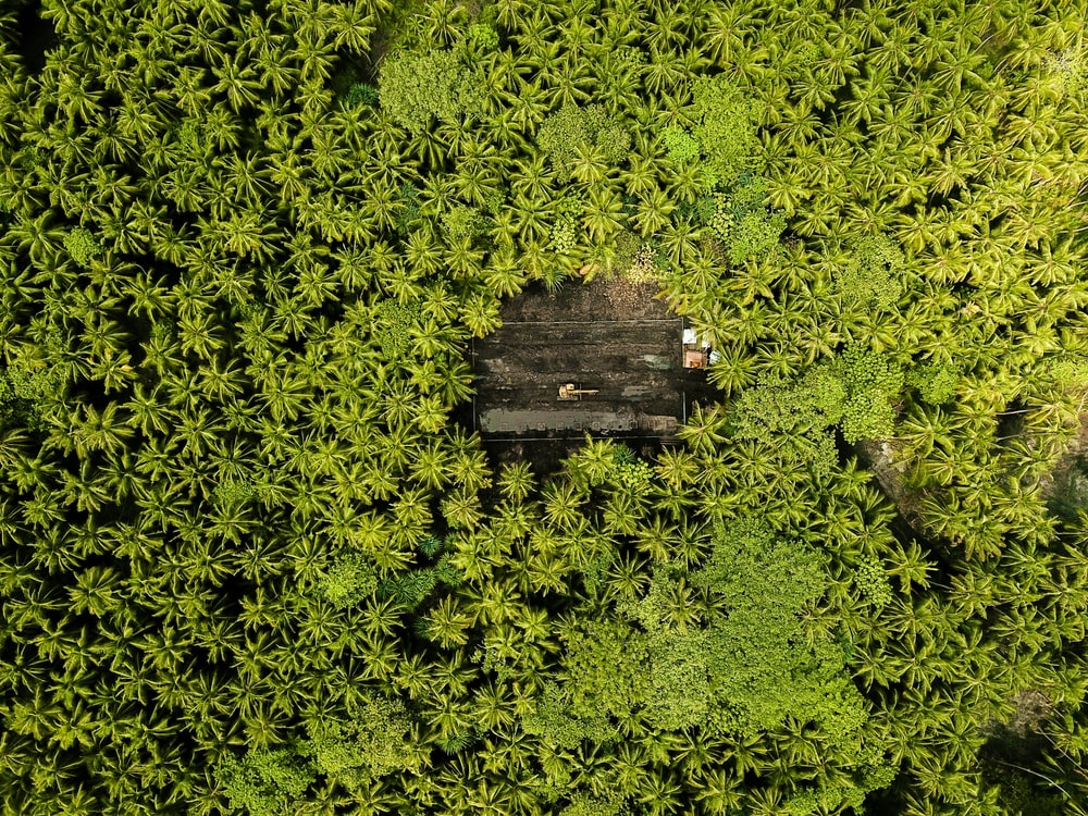 bird's-eye view of green leaf forest