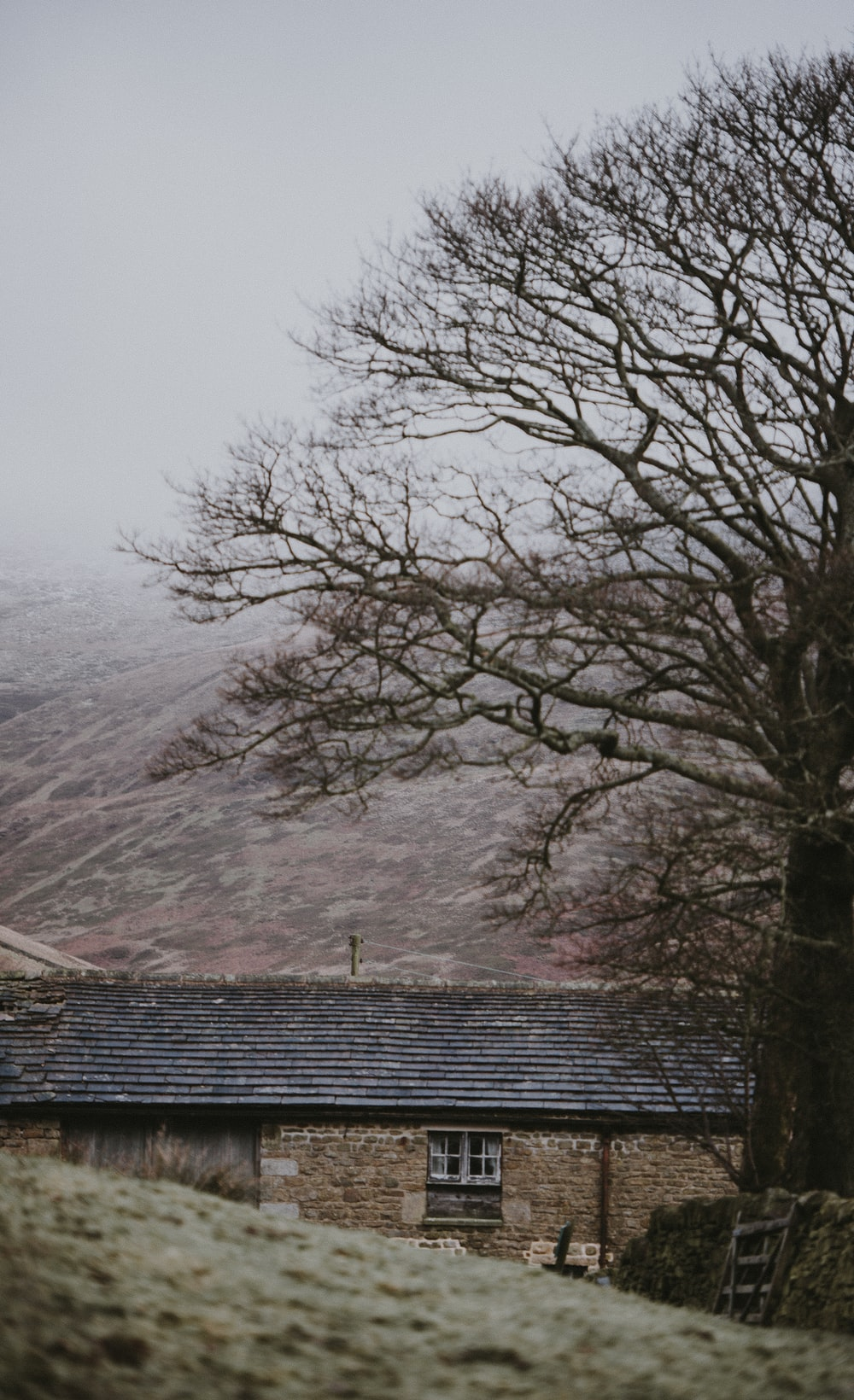 bare tree beside house taken at cloudy morning