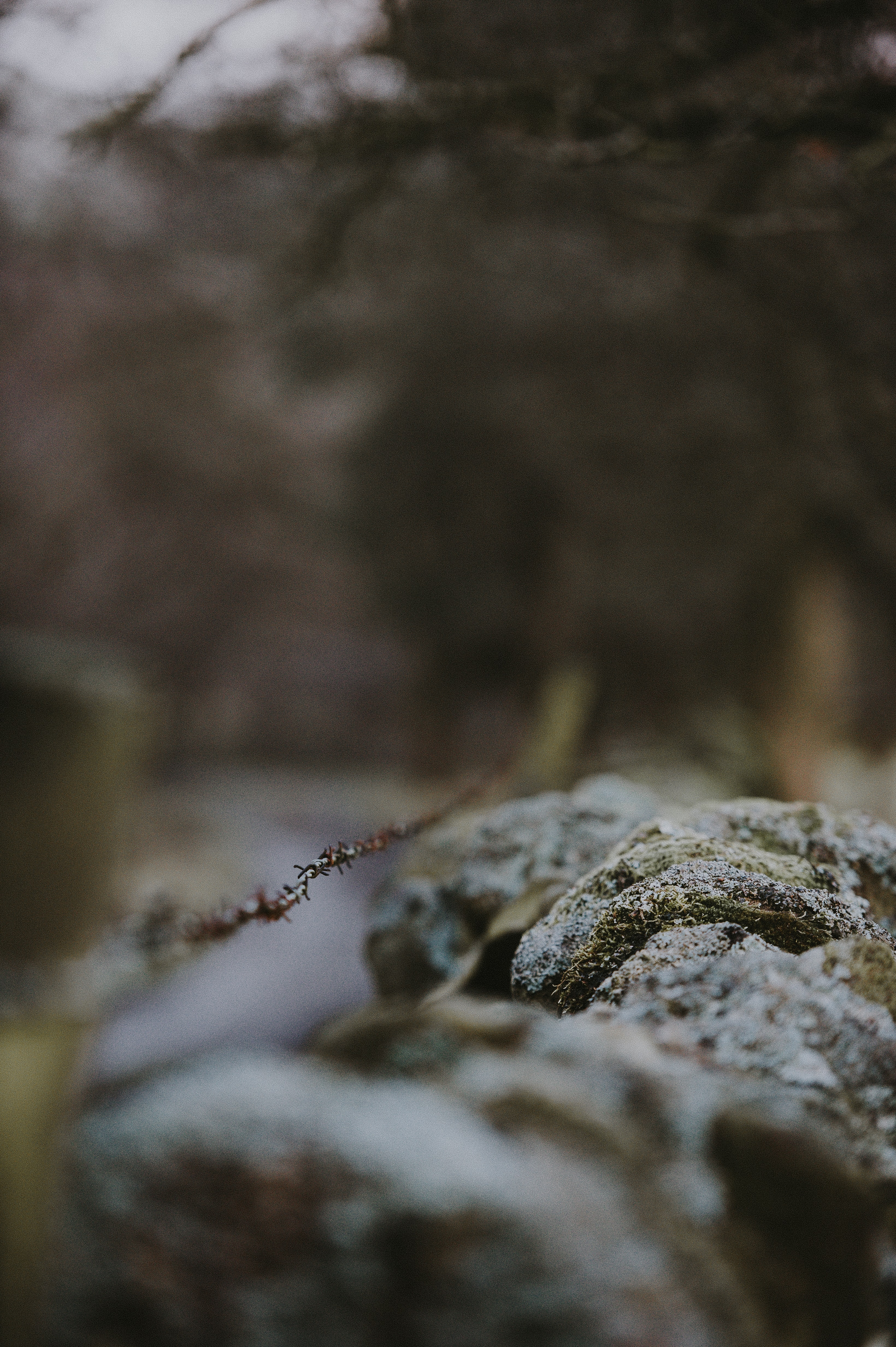 shallow depth of field photography of rock formation