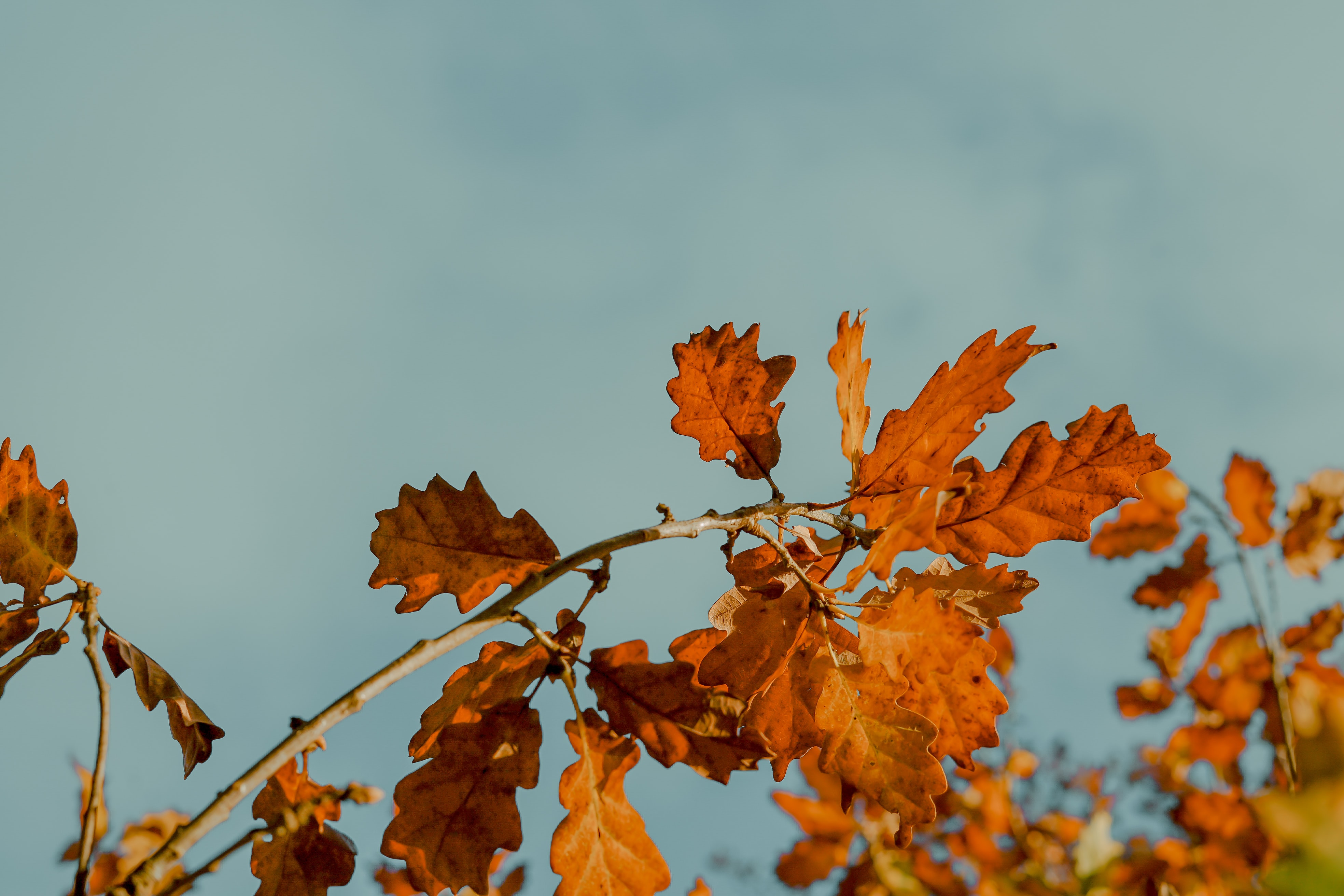 dried leaves under white clouds at daytime