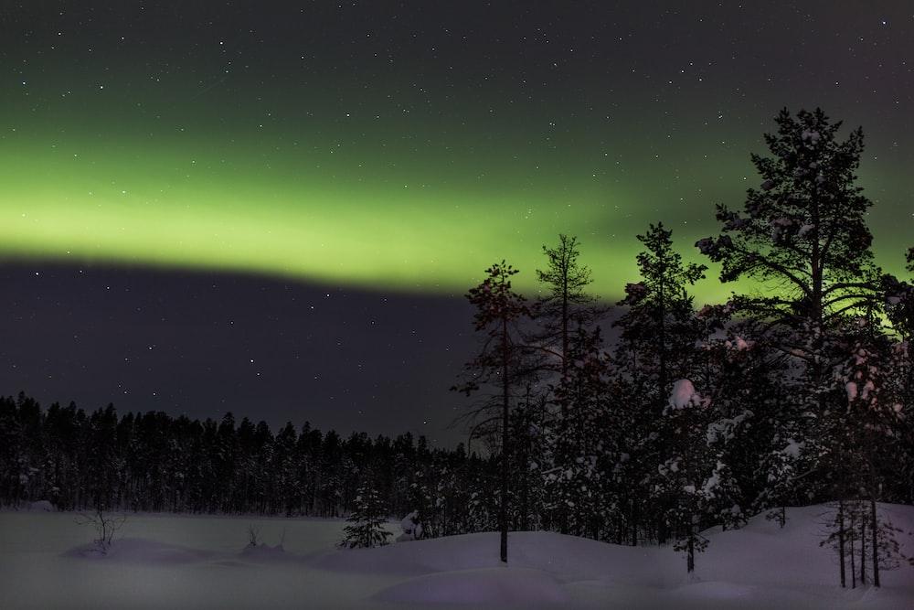 trees on field covered with snow during Aurora Borealis Phenomenon