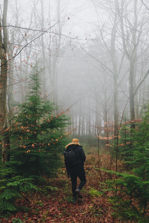 man in between trees inside fog during daytime