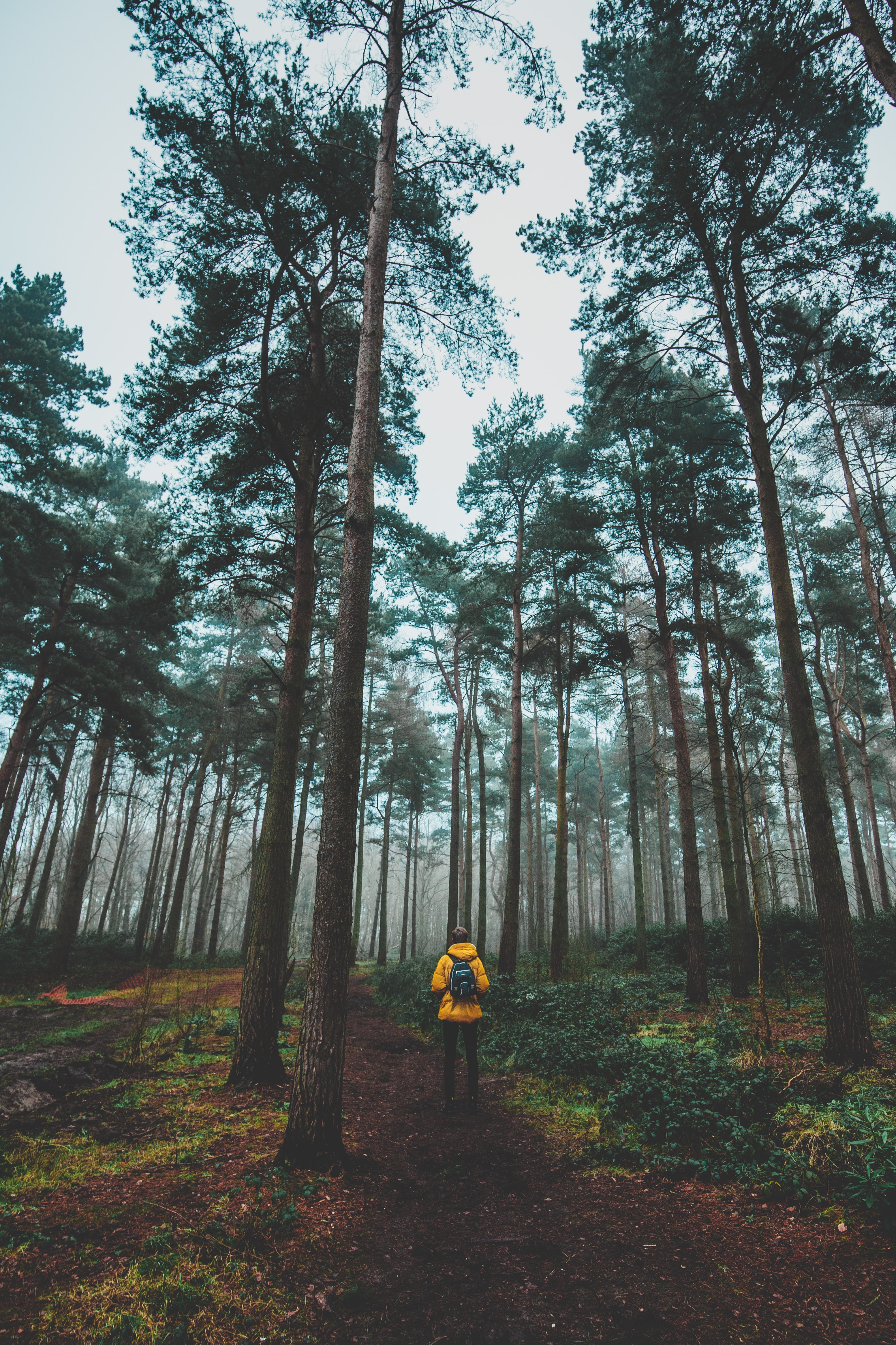 man wearing yellow jacket standing in forest
