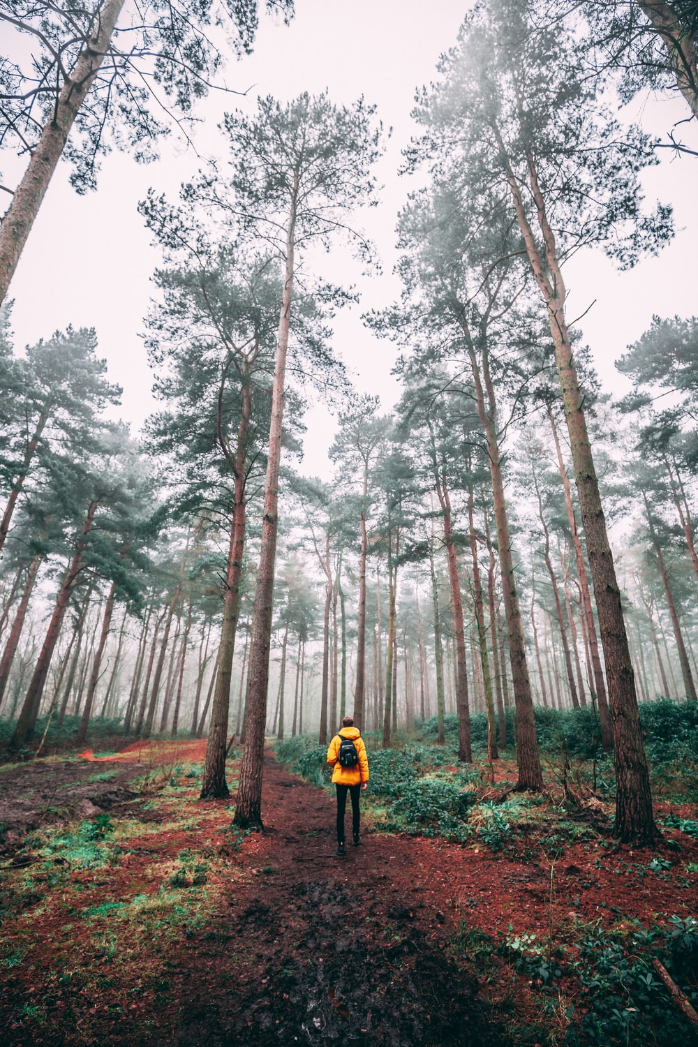 photo of man surrounded by trees