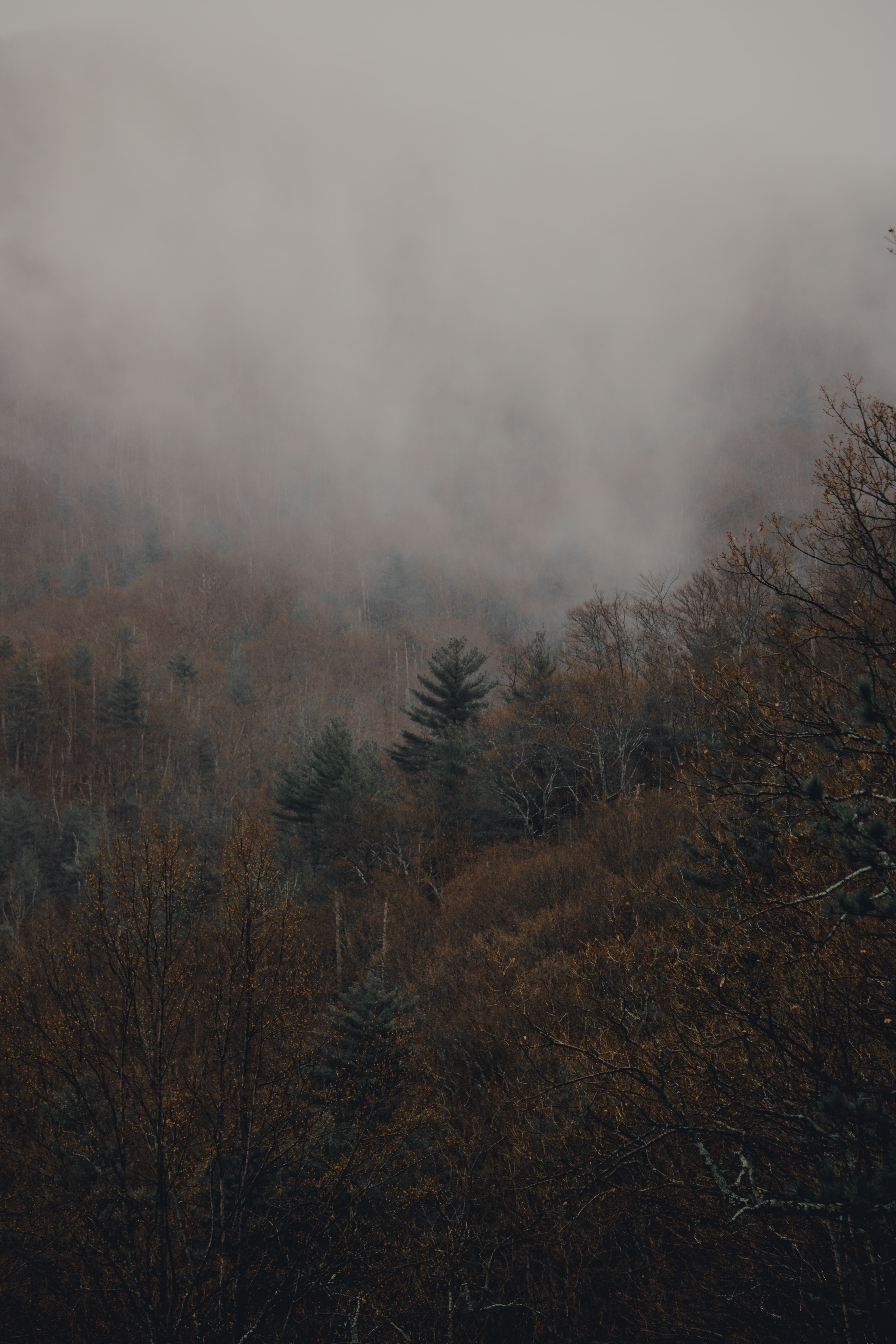green and beige plants on foggy terrain during daytime