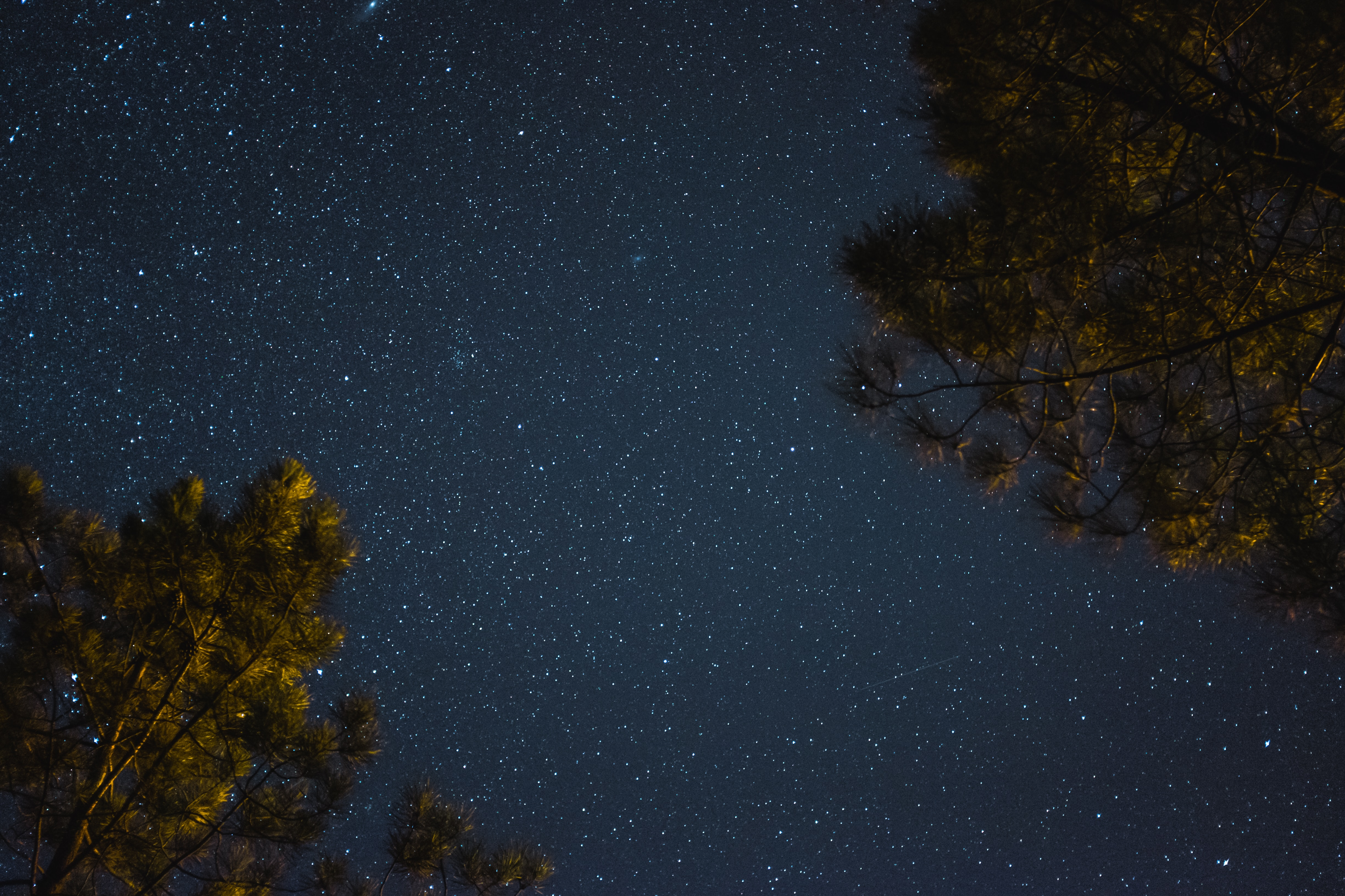 low-angle photography of trees under starry night
