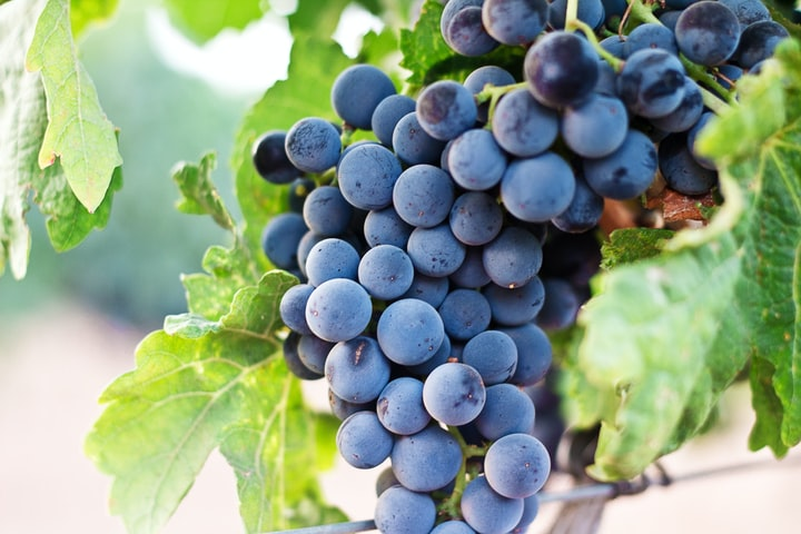 What are the benefits of eating grapes?
