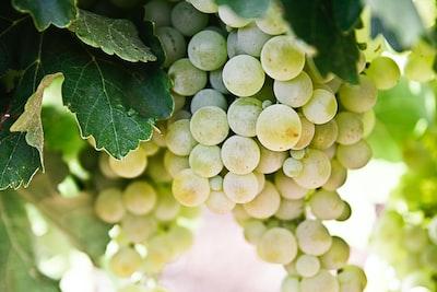 4683. Bor,szőlő, borászatok
