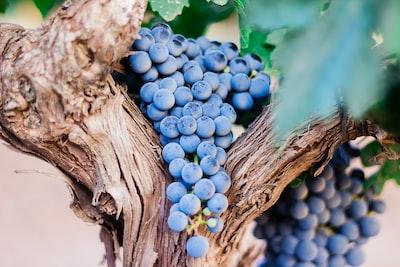 4687. Bor,szőlő, borászatok