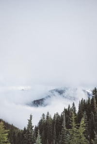 aerial photography of trees overlooking mountain covered in fog at daytime