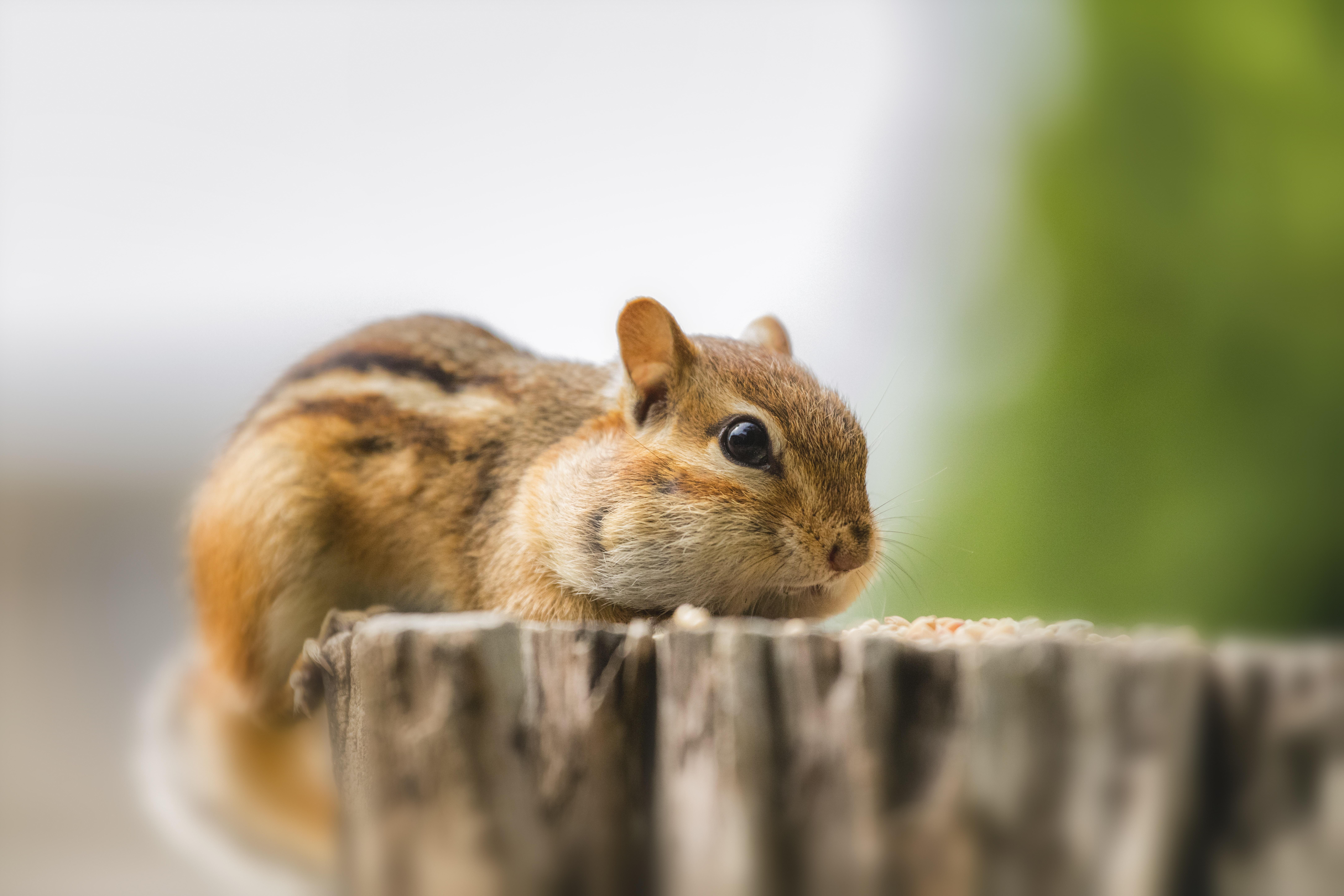 squirrel on brown wood