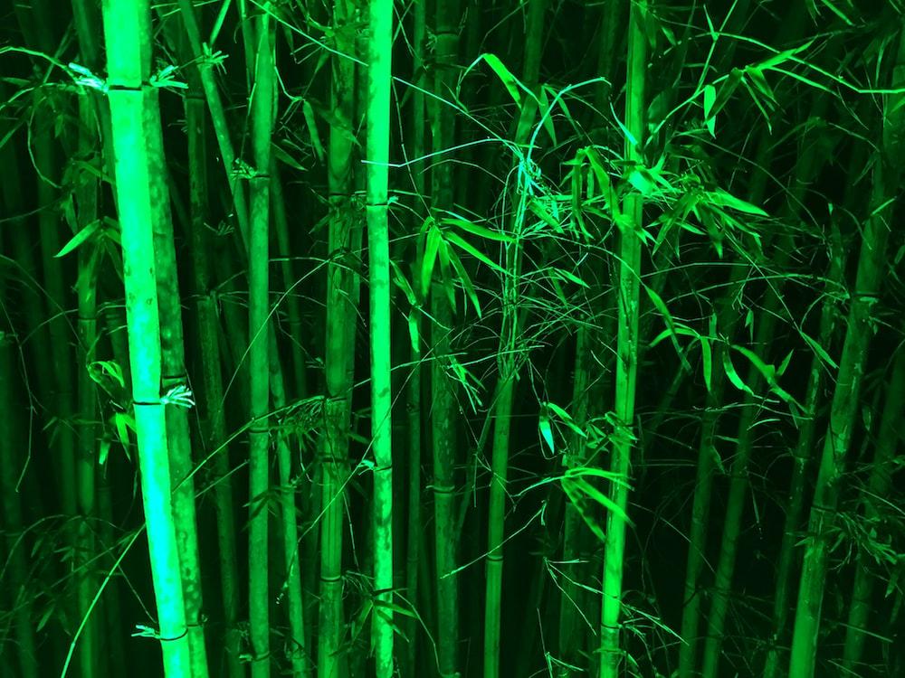 bamboo steams