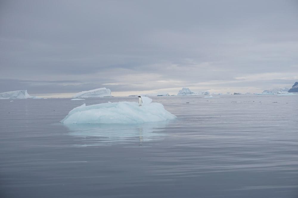 penguin standing on iceberg