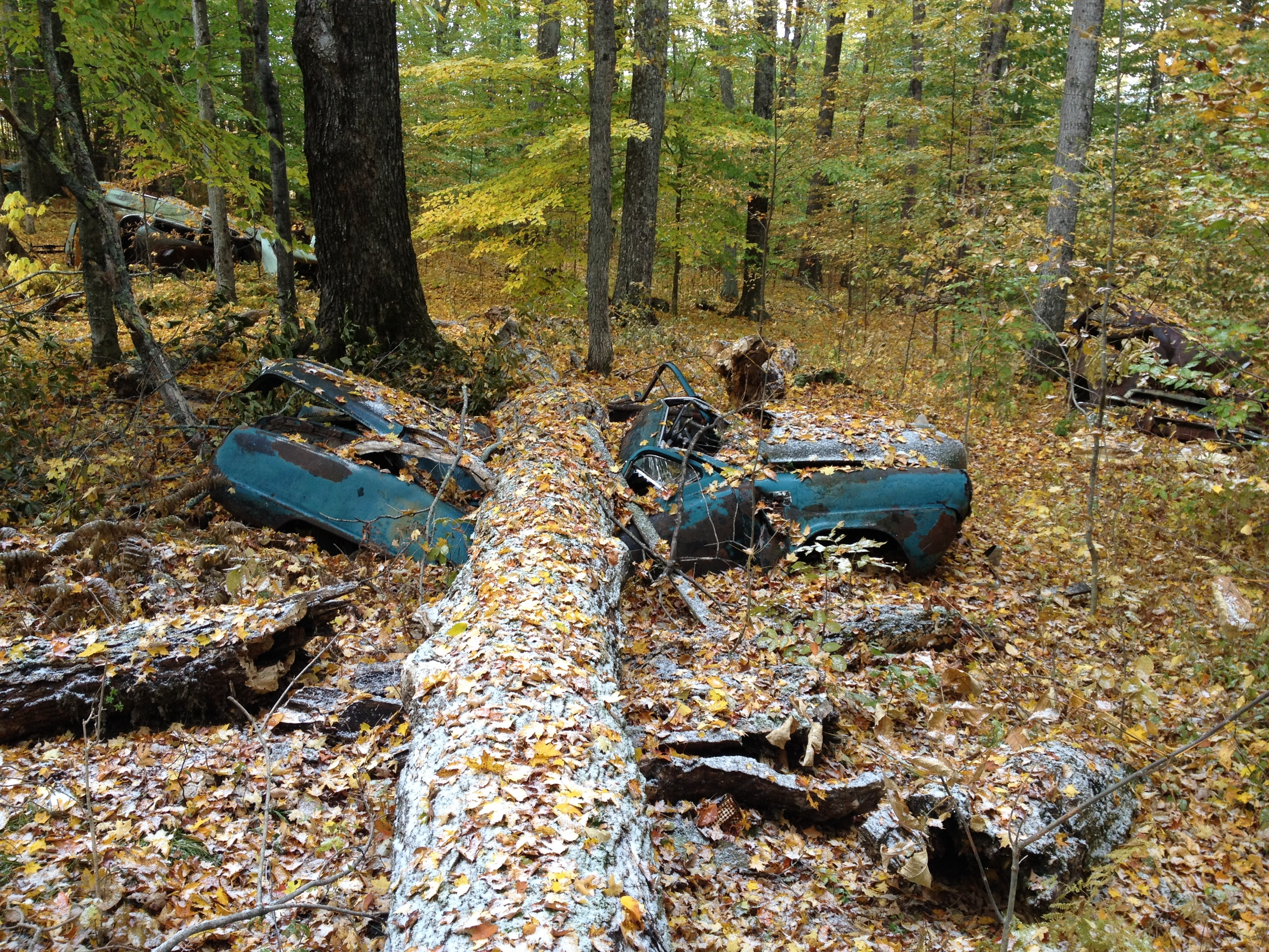 blue vehicle topped by rotting tree taken at daytime